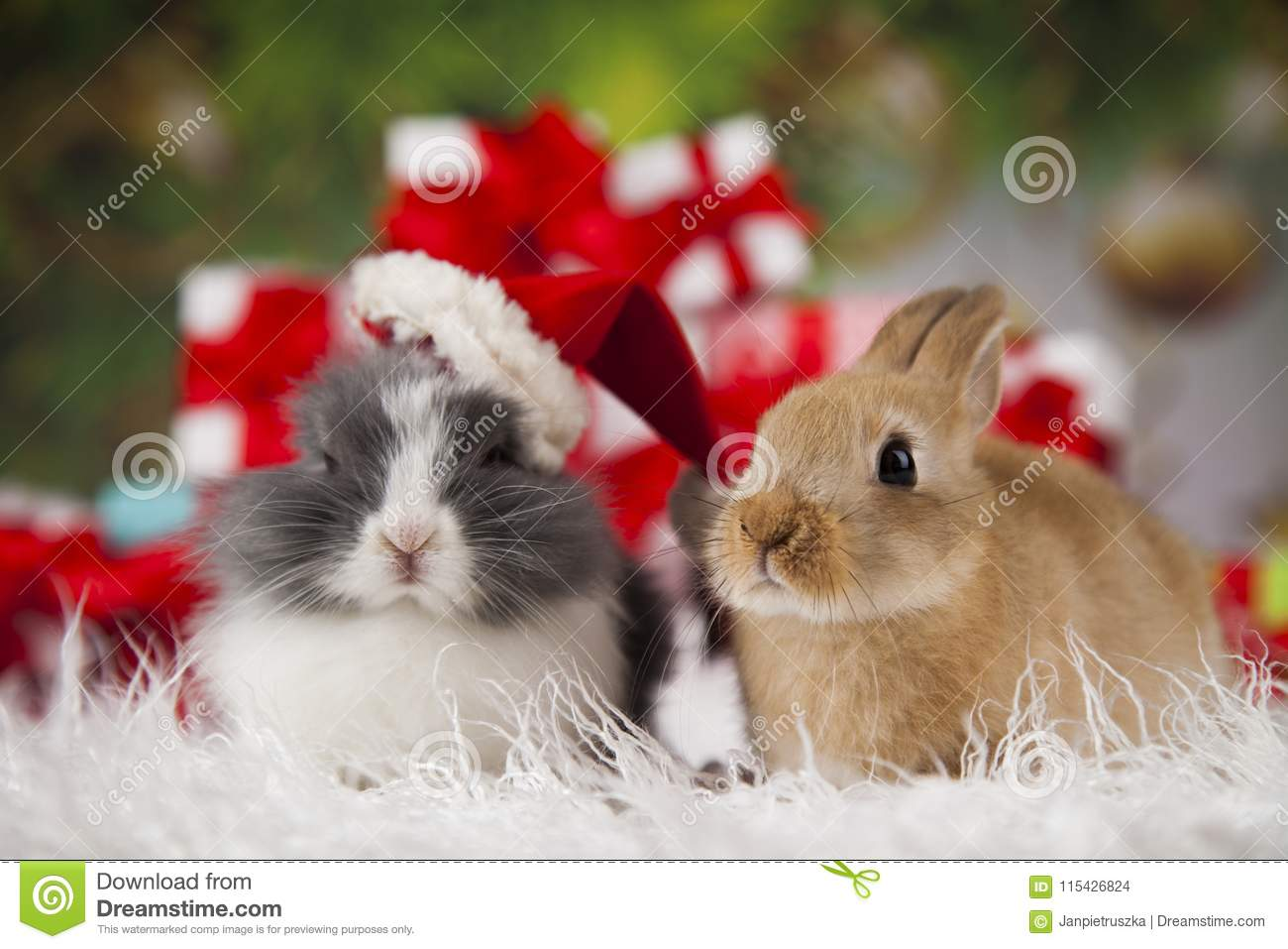 download bunny with rabbit christmas red santa hat on winter decoration stock photo image