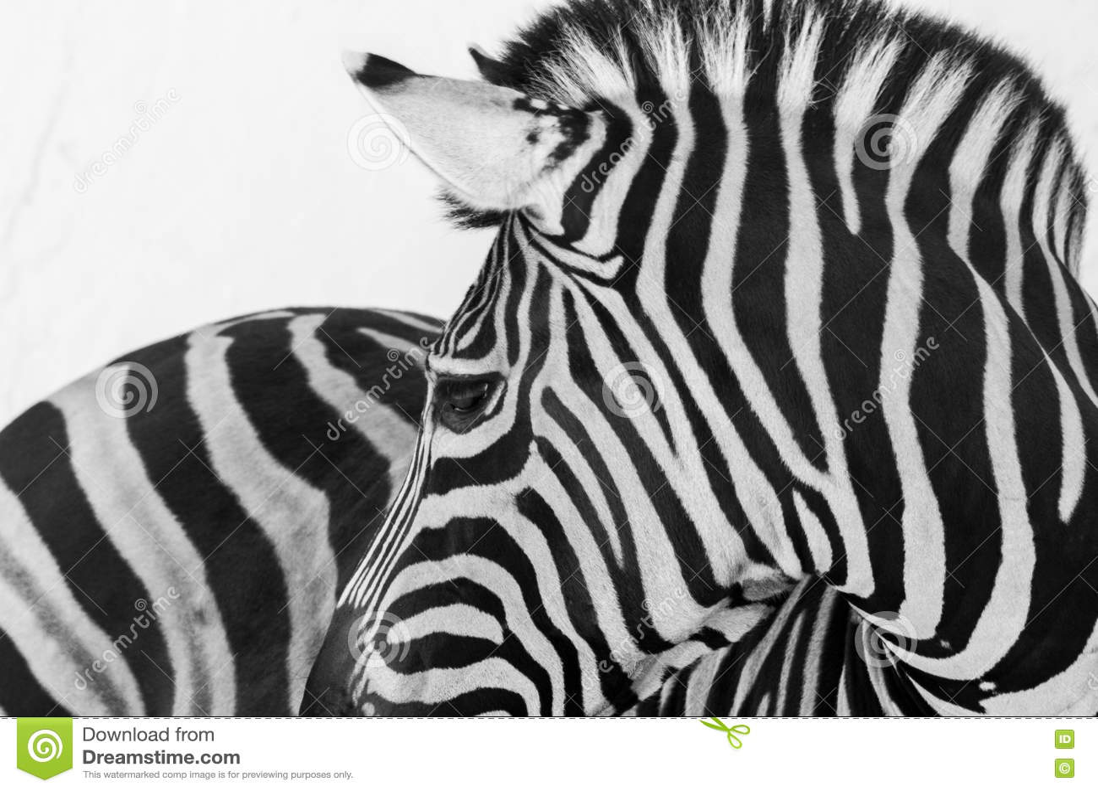 Animal selvagem
