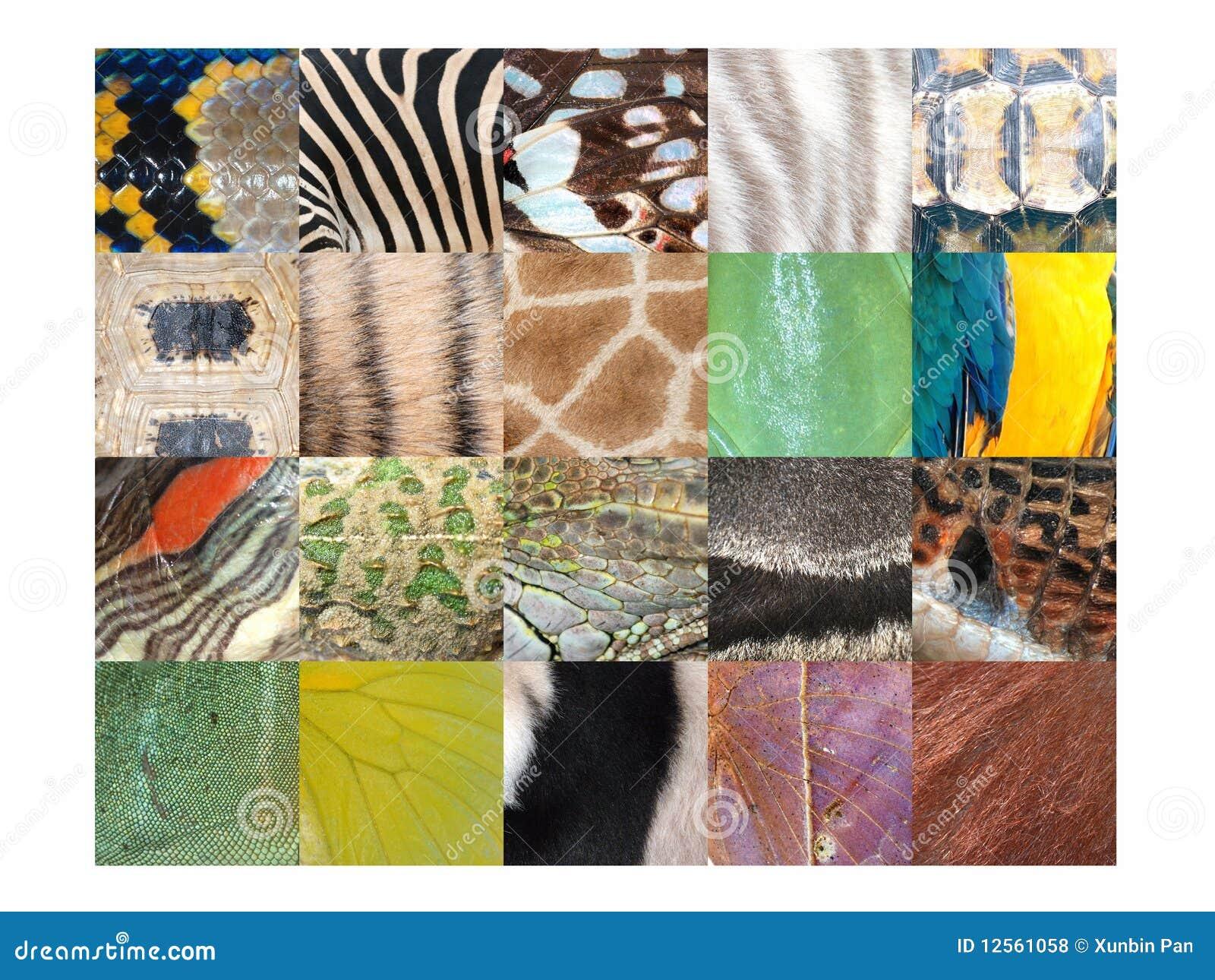Animal Skin Fur Pattern Detail Collection Royalty Free ... Giraffe Skin Pattern
