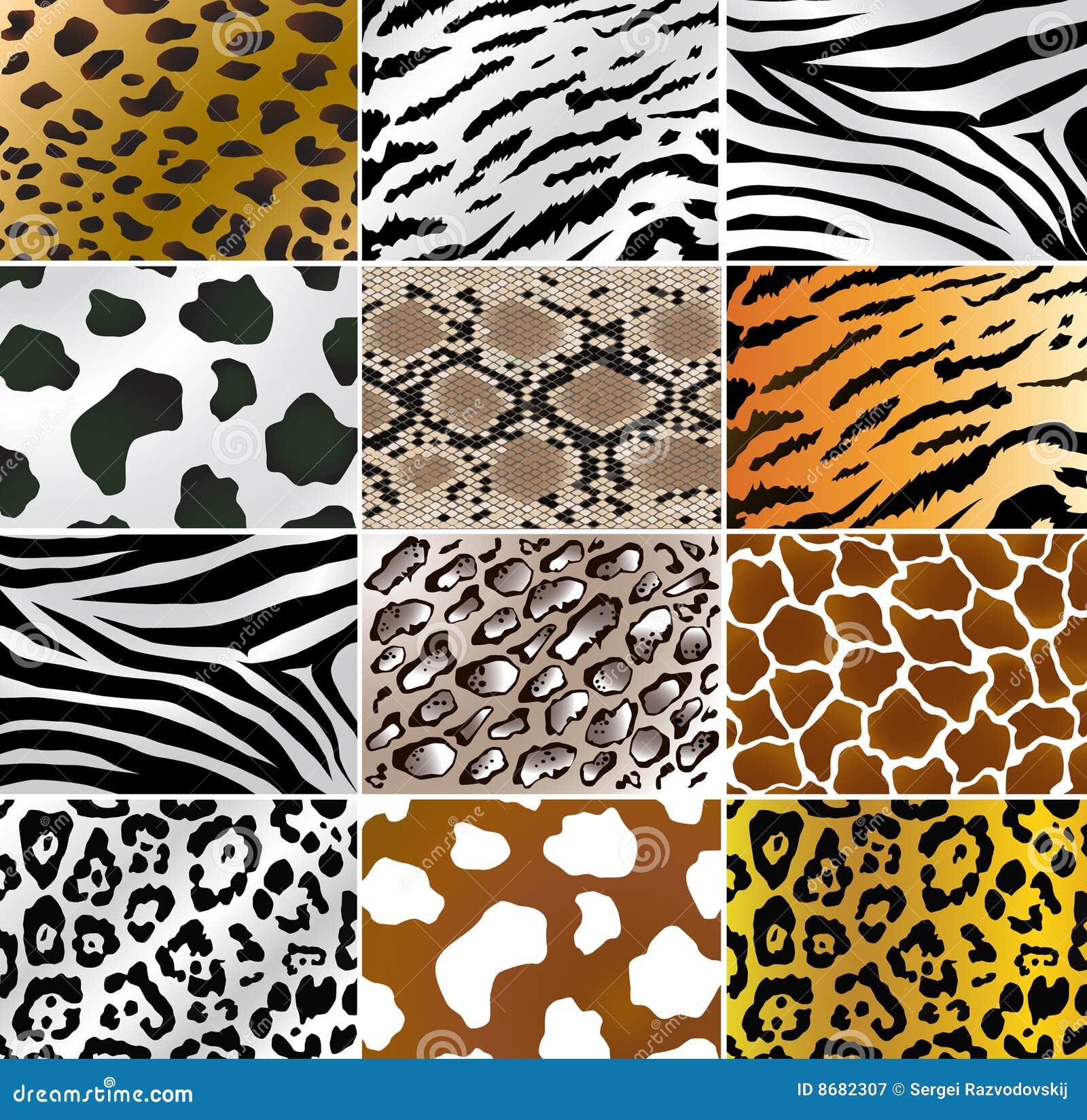 Draw House Plan Animal Skins Royalty Free Stock Photography Image 8682307