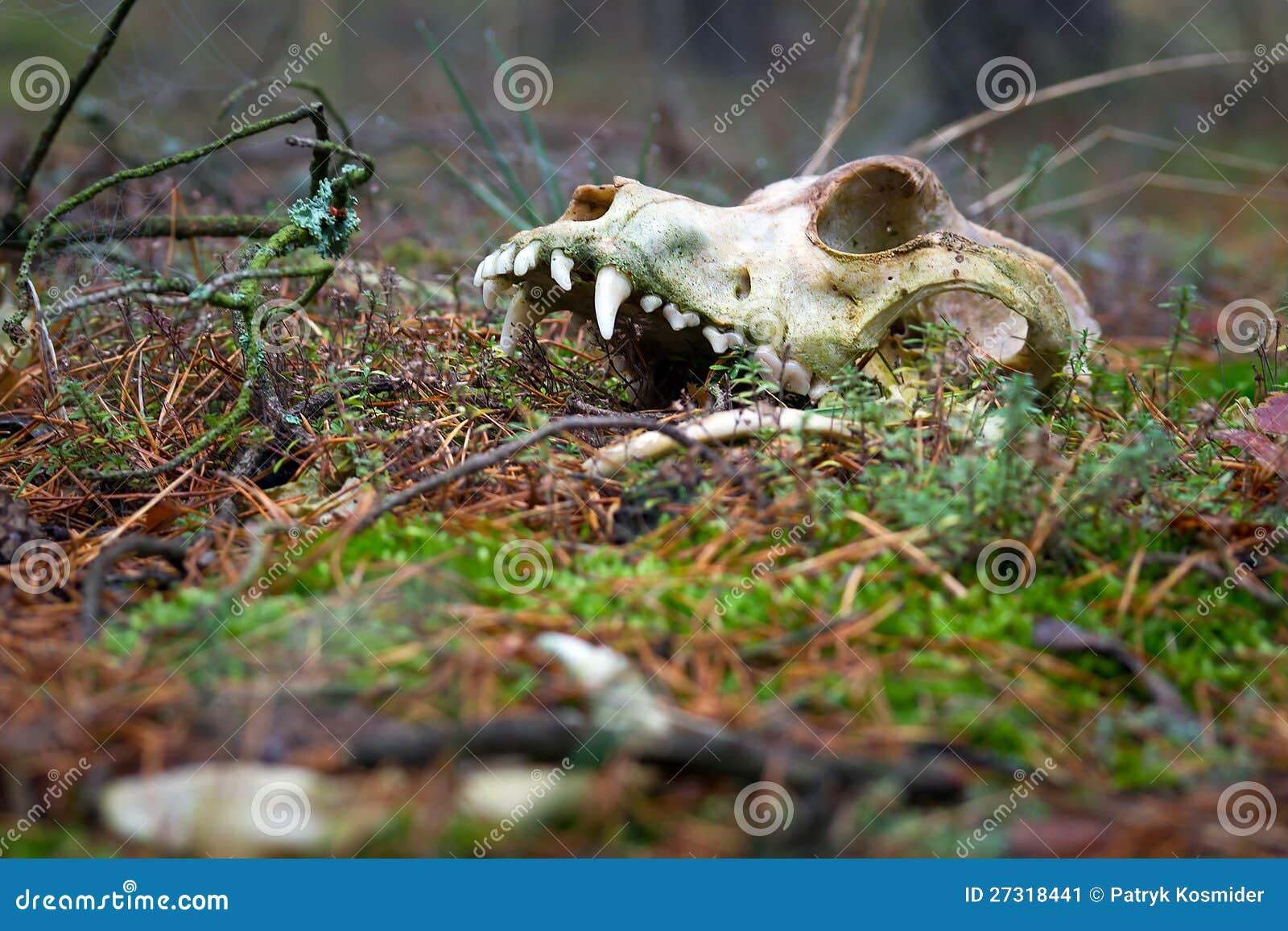 Animal Skull In Dark Forest Stock Image Image 27318441