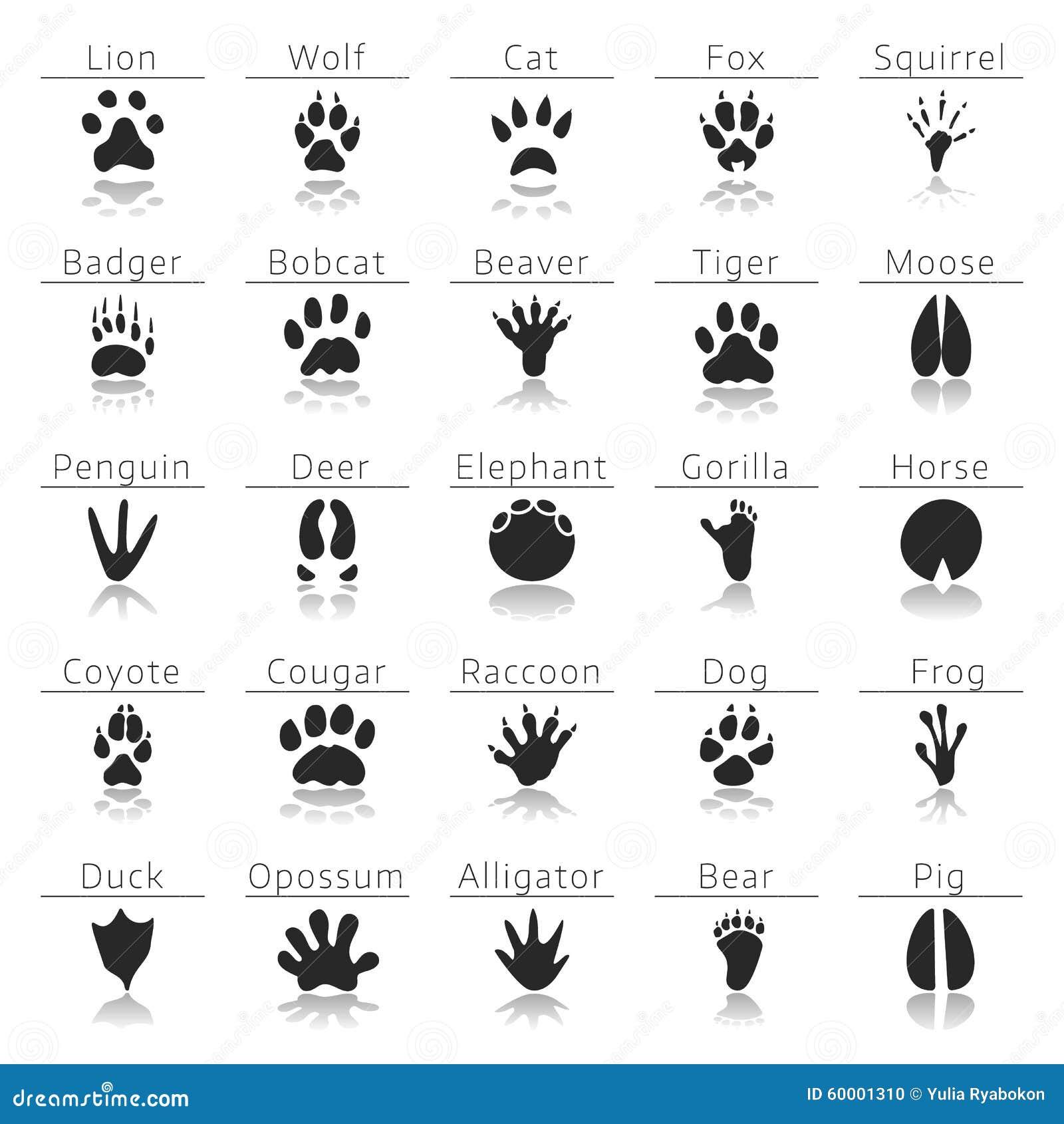 animal track prints set paw prints art paw prints