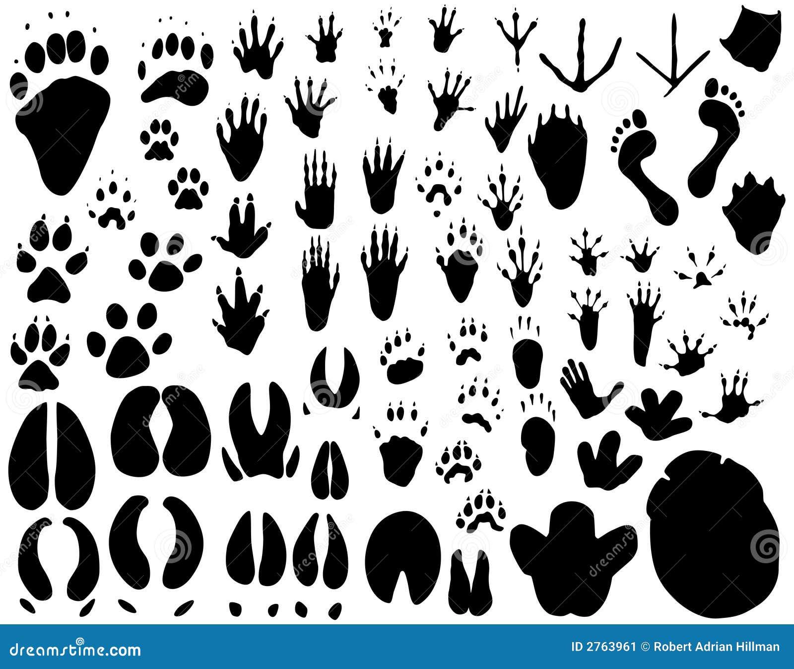 Animal Tracks Stock Image Image 2763961