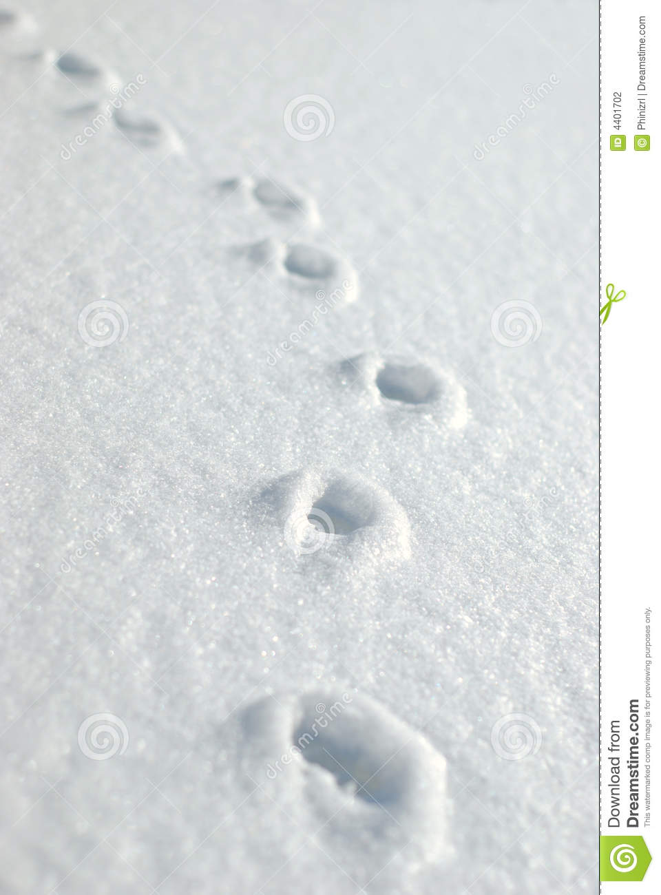 Animal Tracks Stock Photography - Image: 4401702