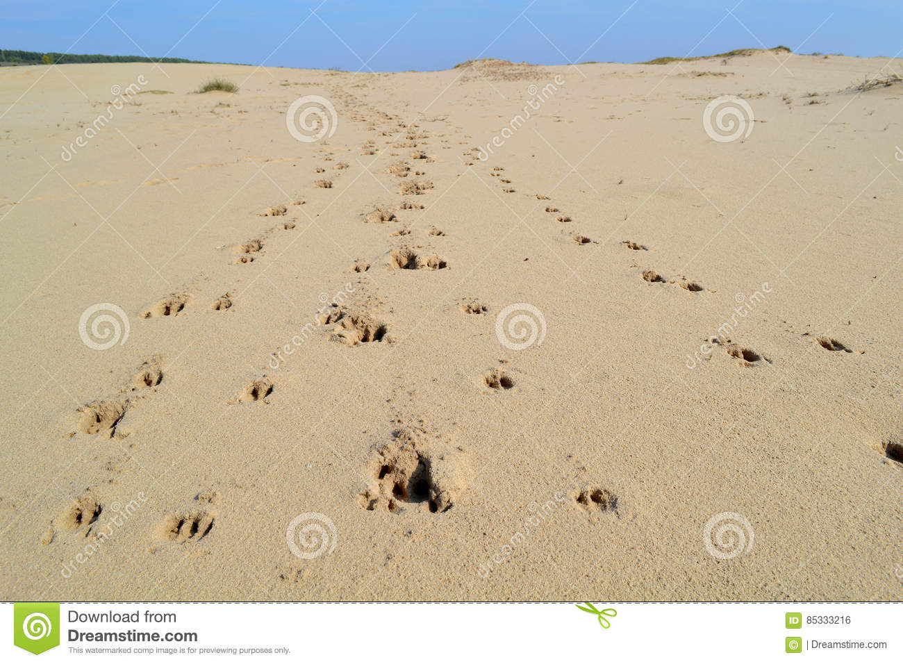 Em Ĵevurá - Página 11 Animal-tracks-desert-lot-sand-footprints-85333216