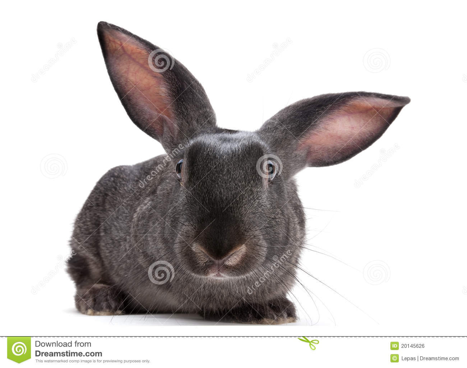 Animale da allevamento del coniglio