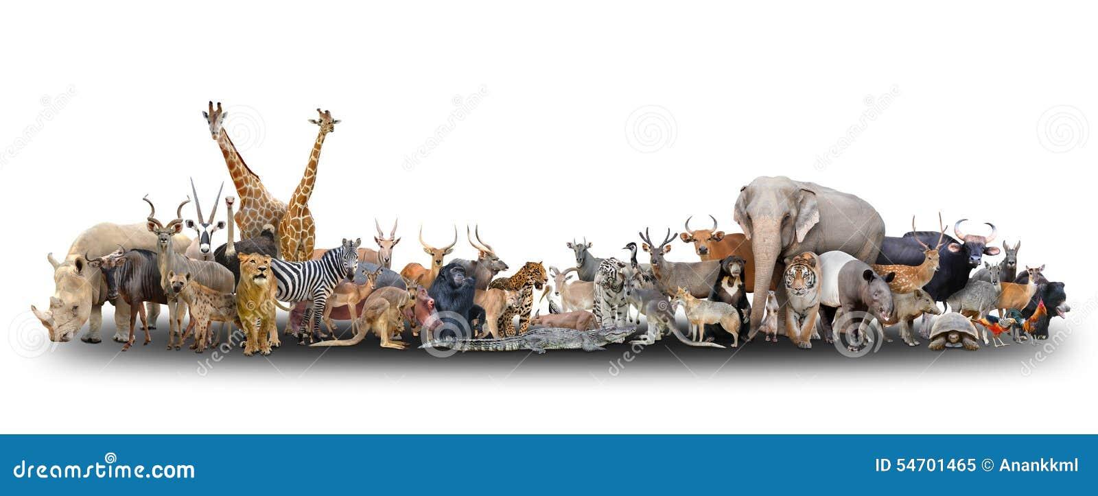 Animale del mondo
