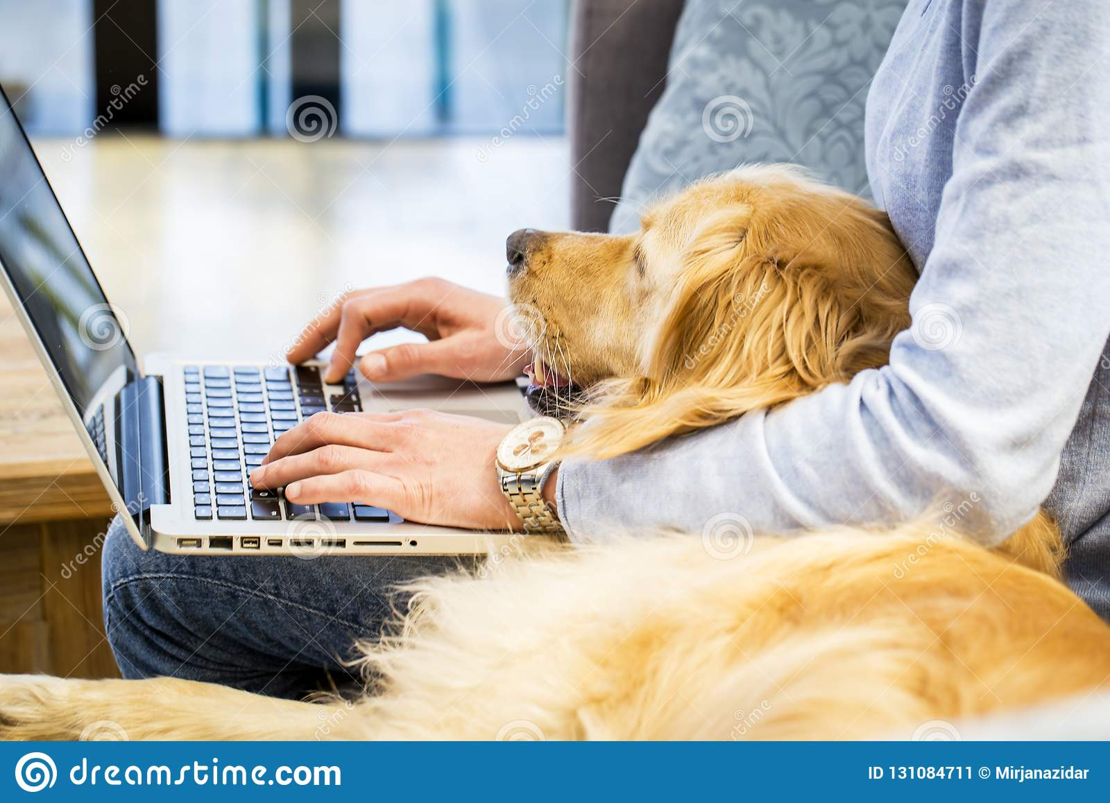 Animale domestico che risiede nel rivestimento del proprietario che sta scrivendo sul computer portatile