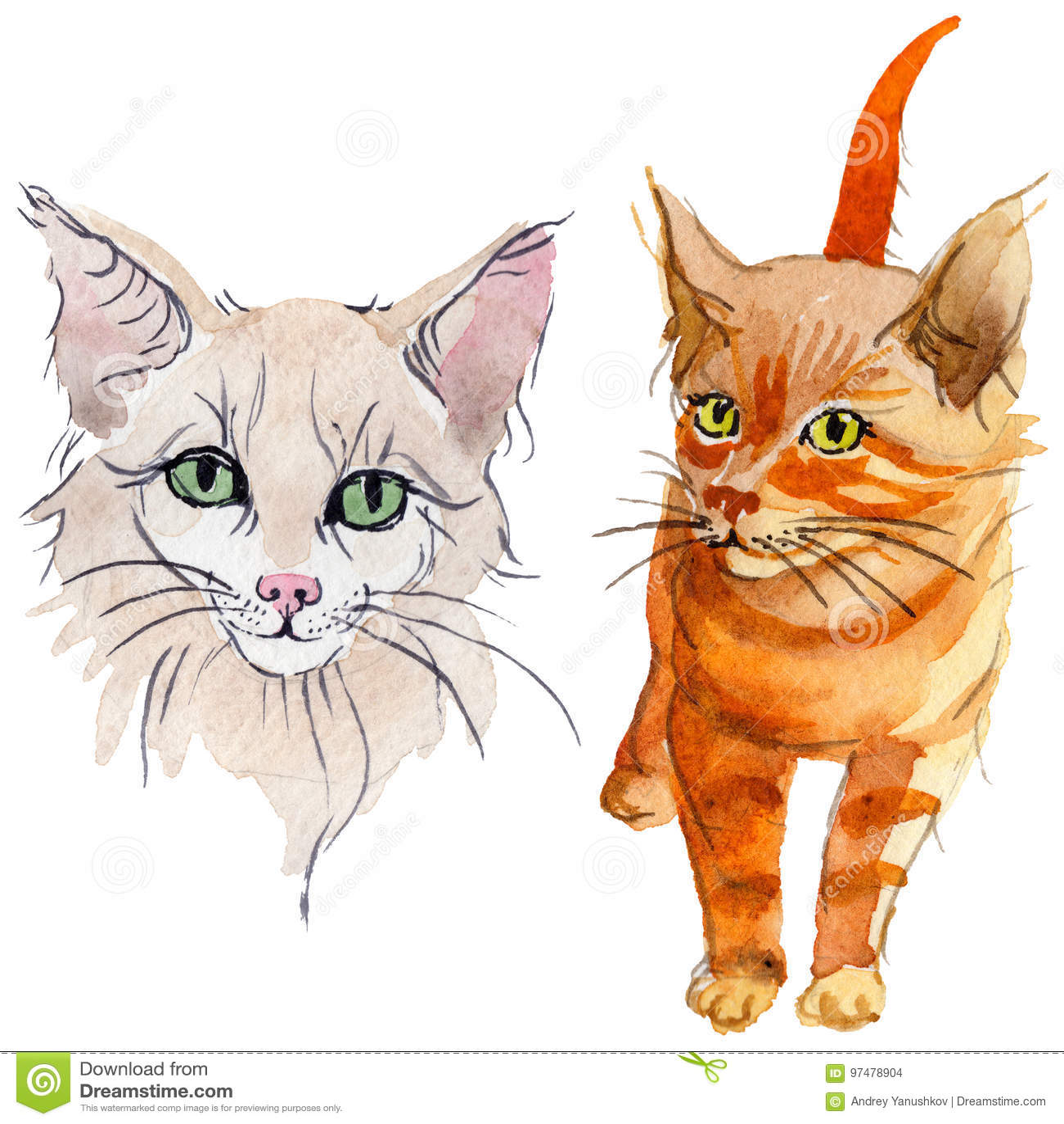 Animale selvatico del gatto in uno stile dell acquerello isolato
