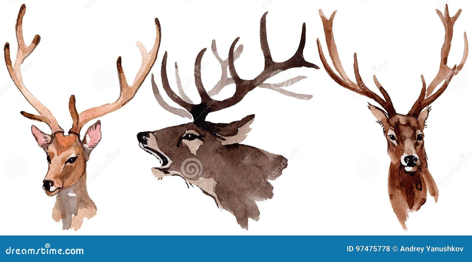 Animale selvatico della renna in uno stile dell acquerello isolato