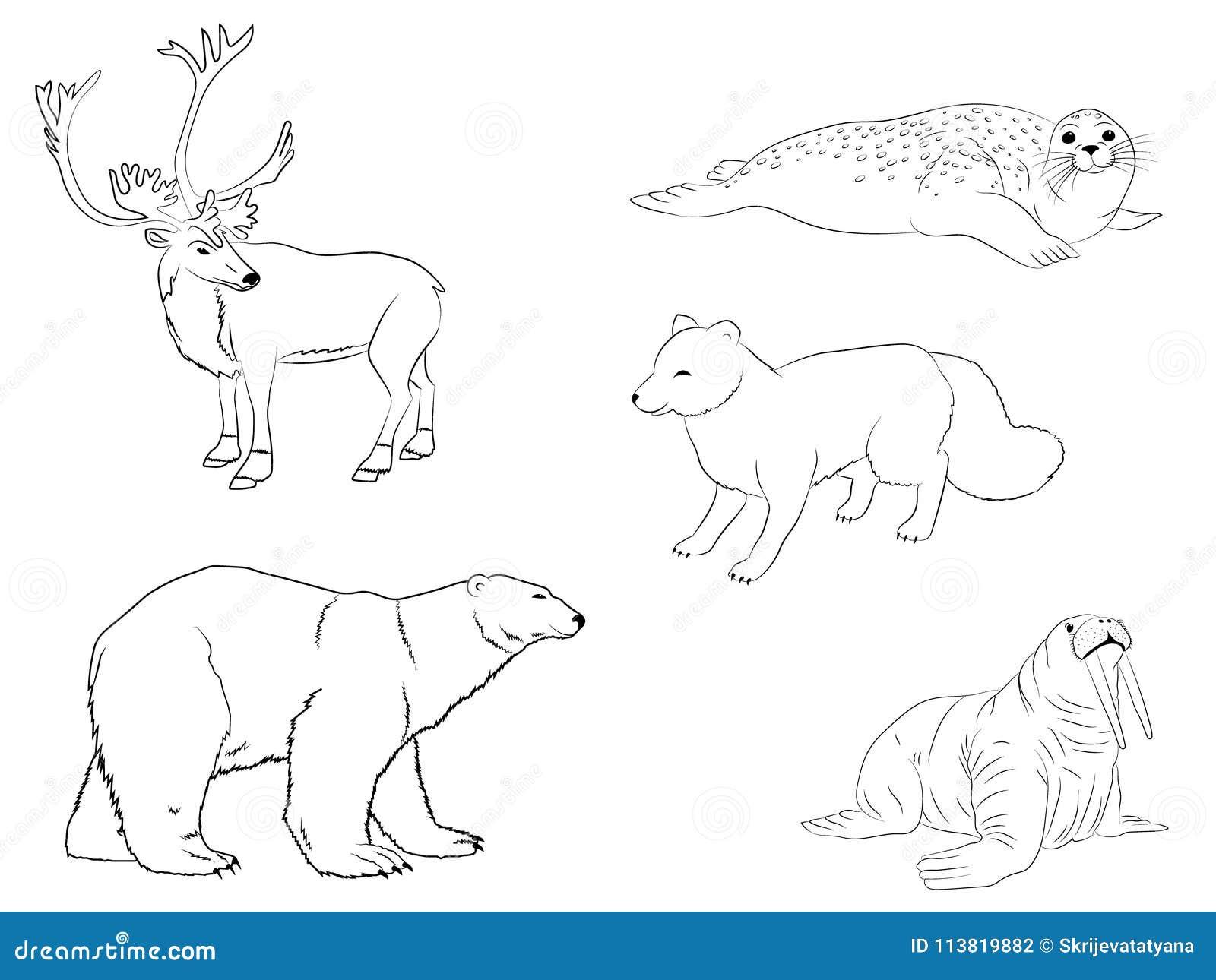 Animales árticos Polares La Colección Del Esquema De Reno, De ...