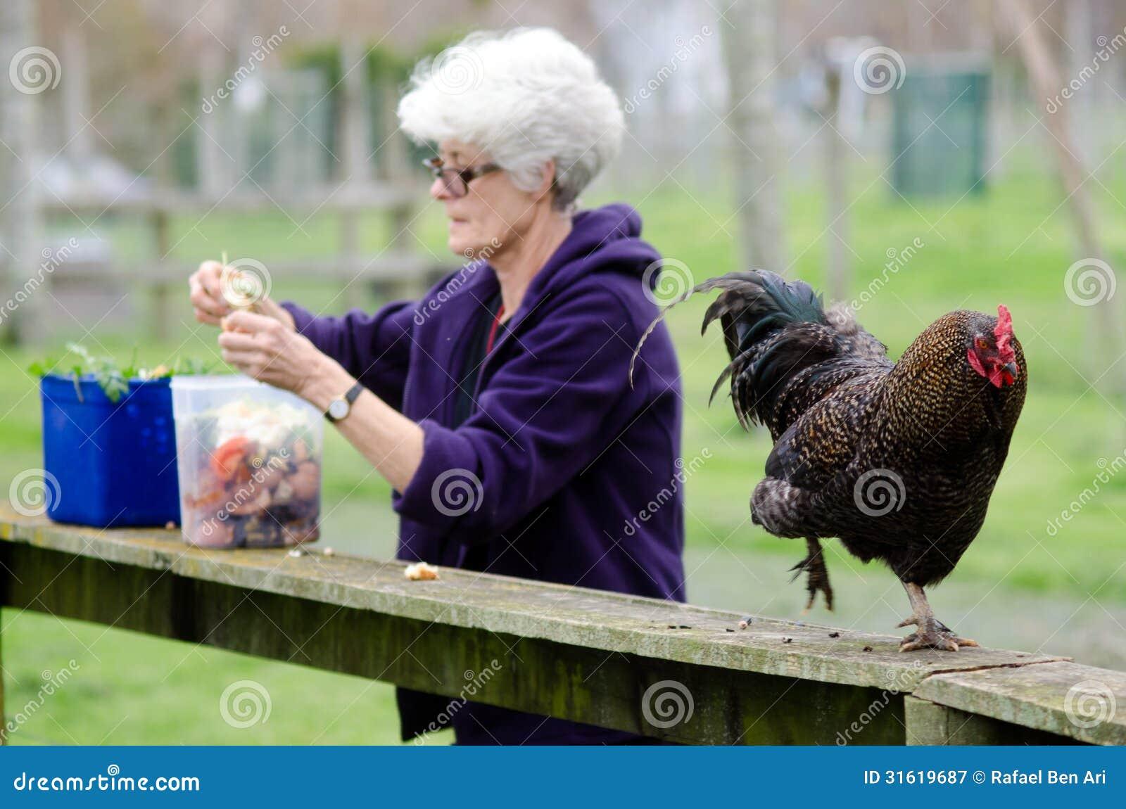 Animales del campo - pollo