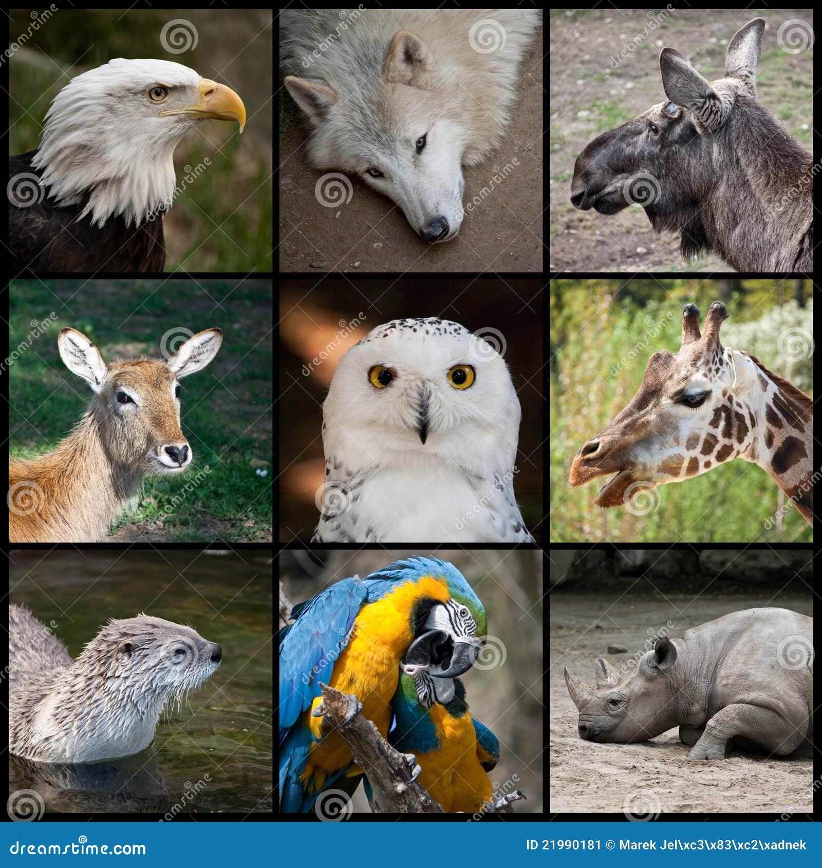Animales del parque zoológico