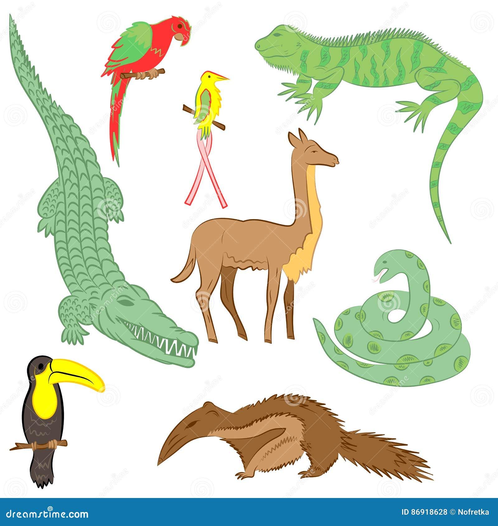 Animales Dibujados Mano Colorida De Suramérica Dibujos Del Garabato