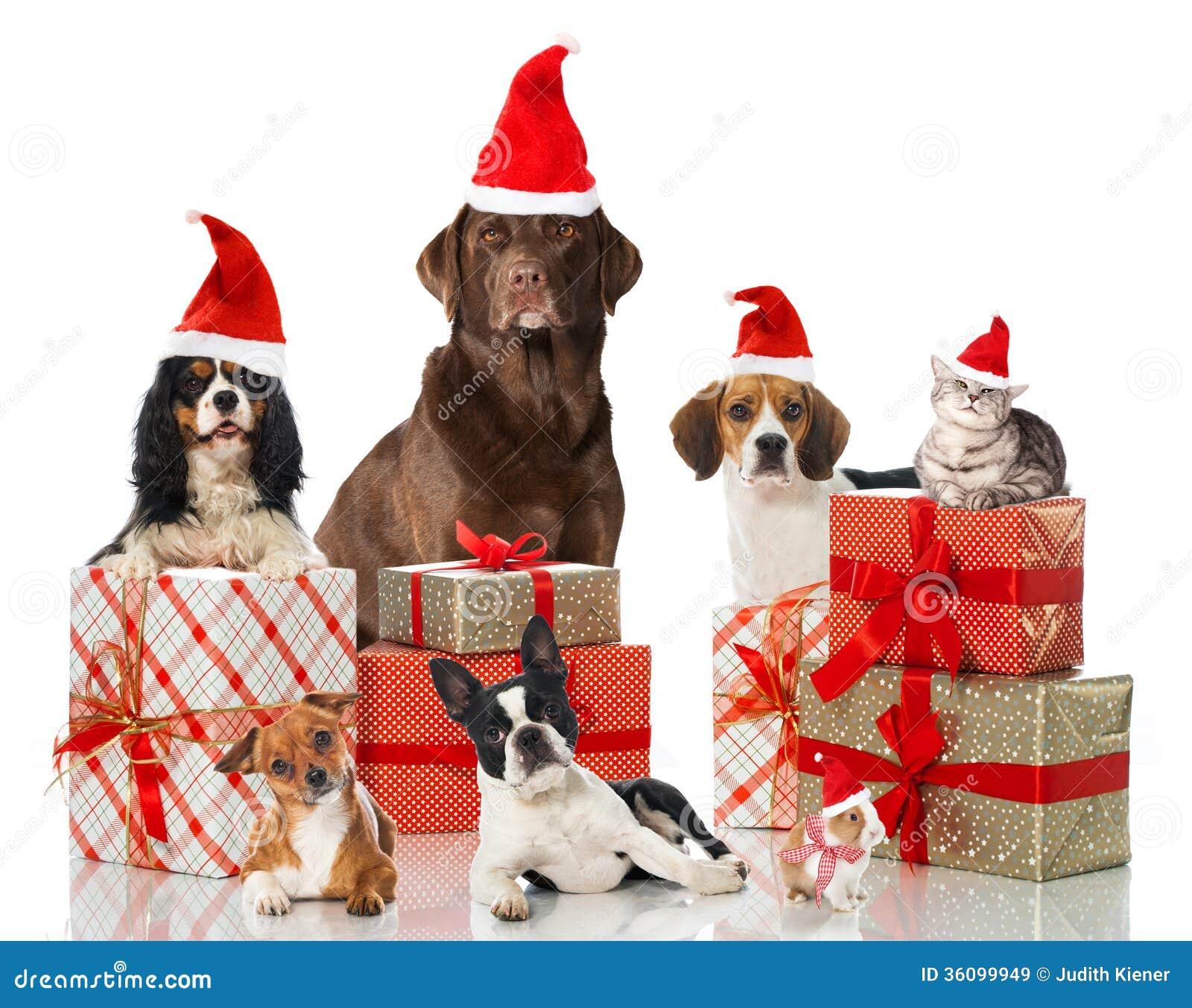 Animales domésticos de la Navidad