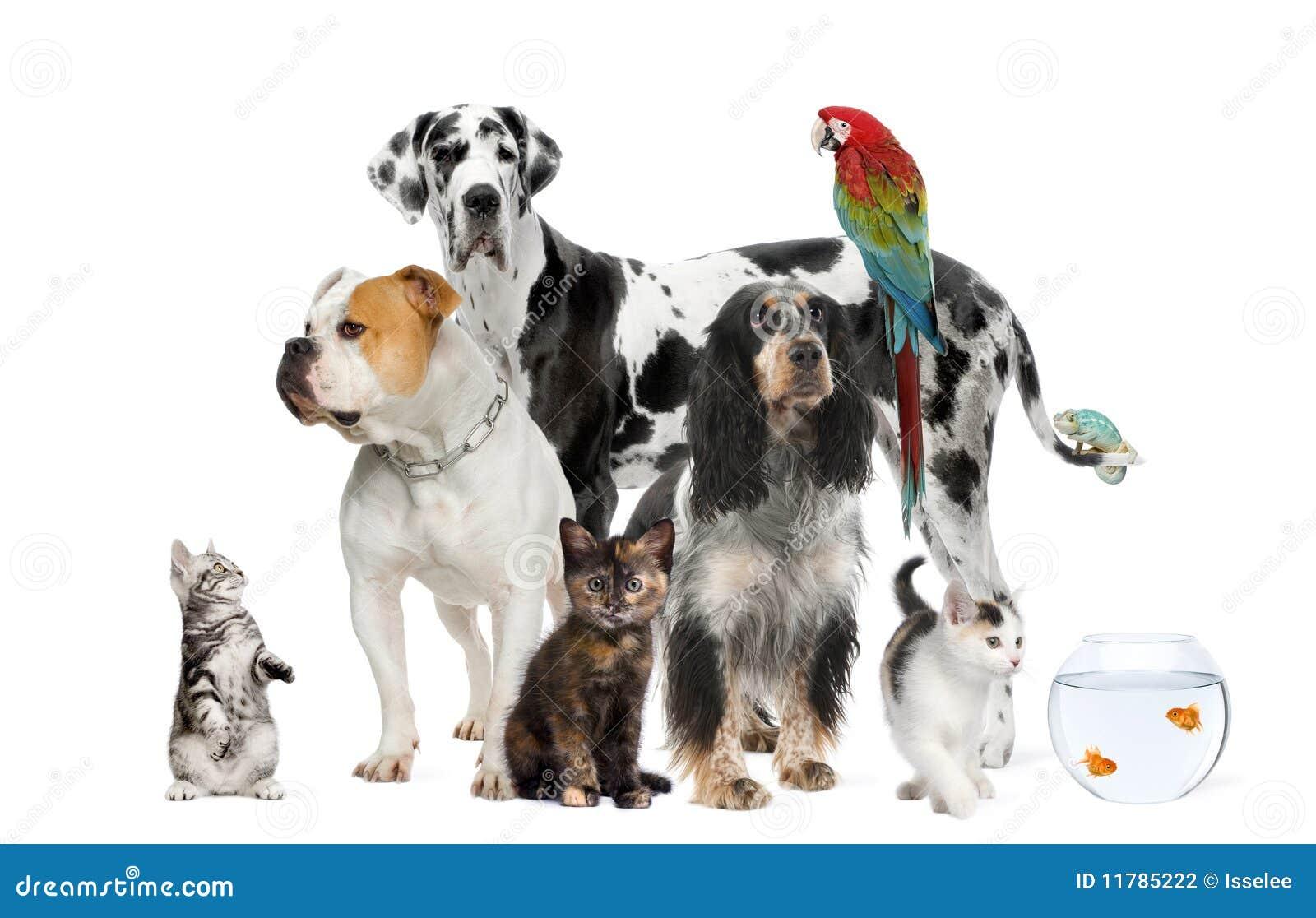 Animales domésticos que se colocan delante del fondo blanco