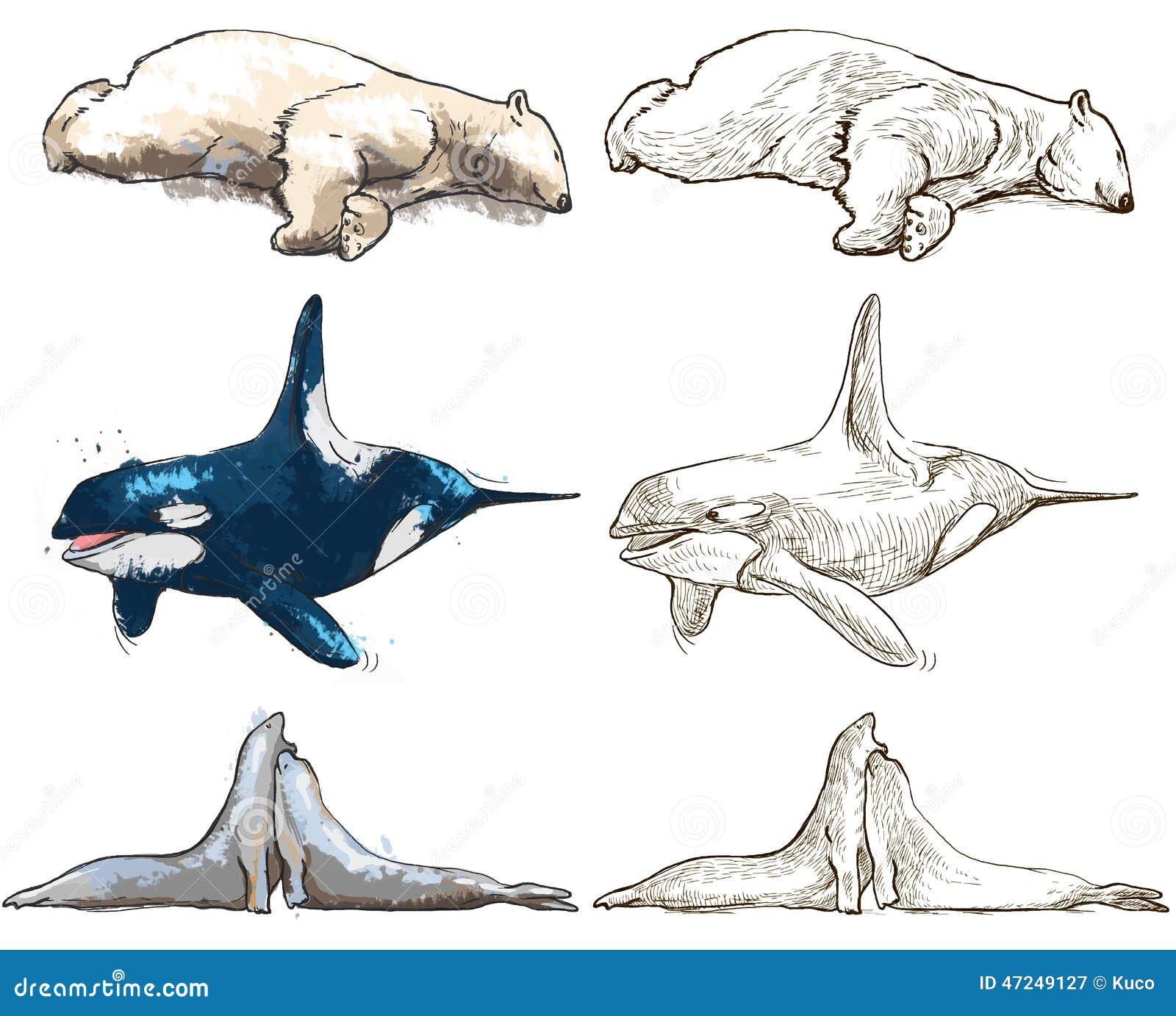 Animales Polares - Libro De Colorear Ilustración del Vector ...