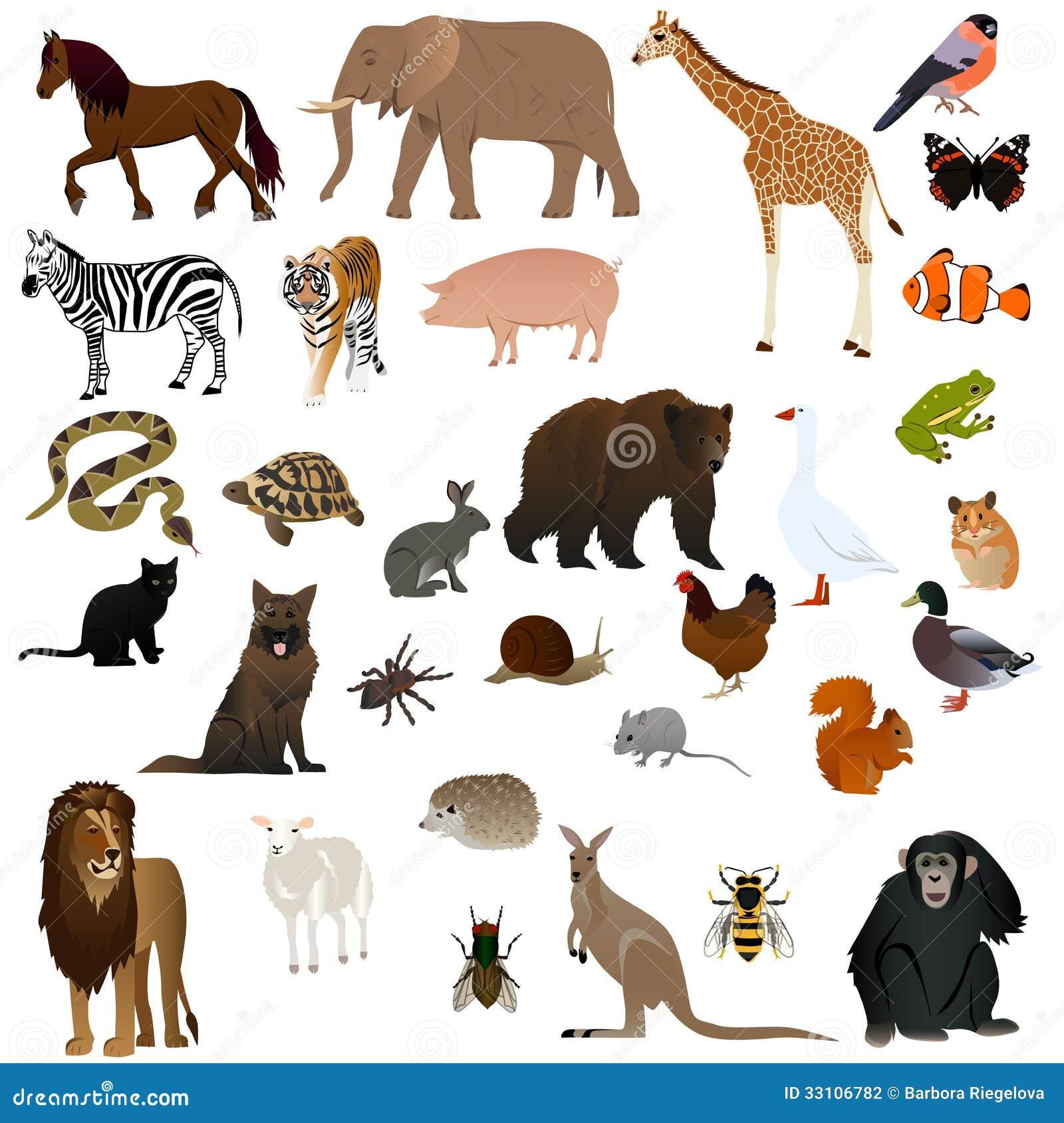 Animali 2