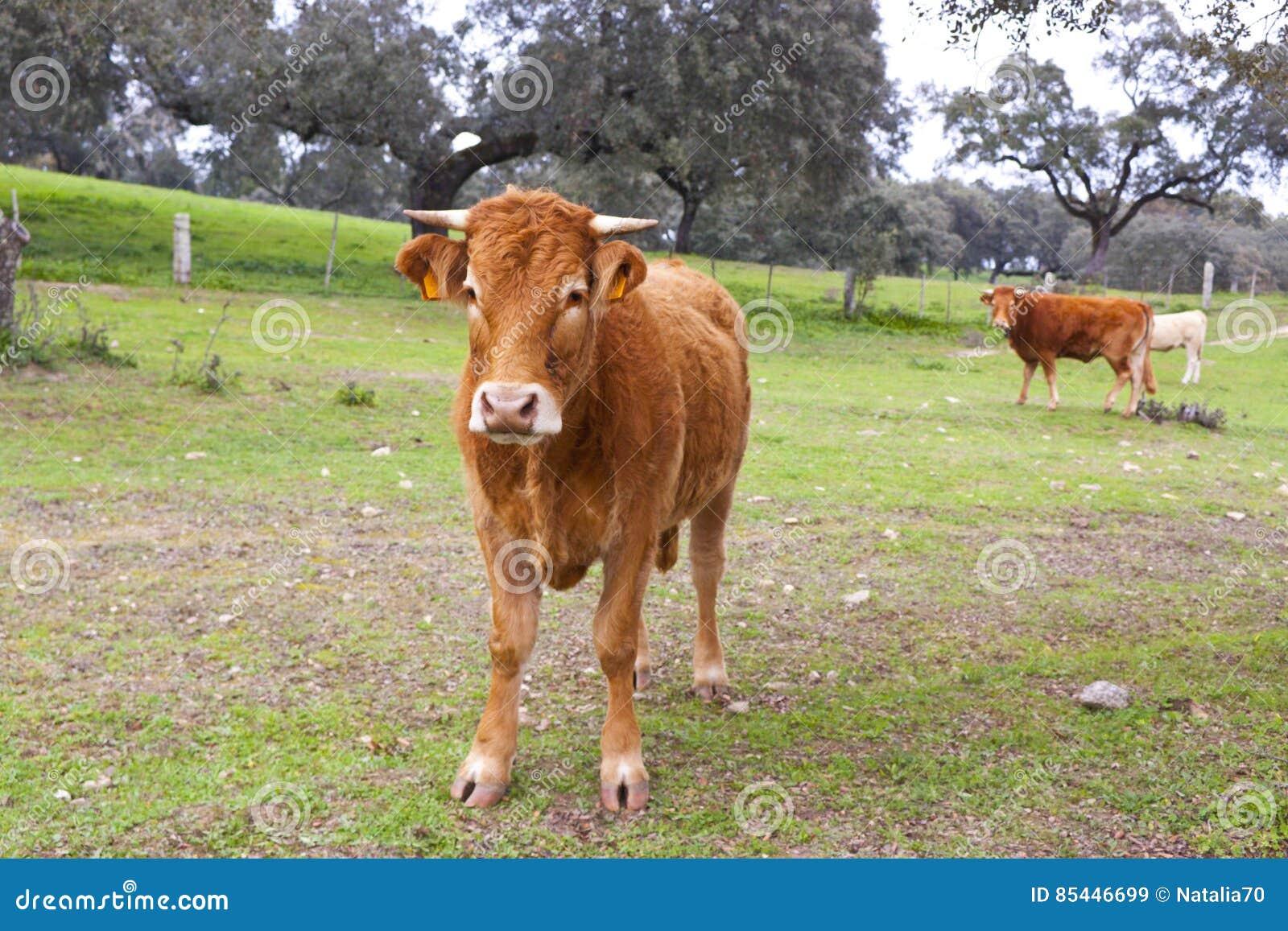 Animali da allevamento