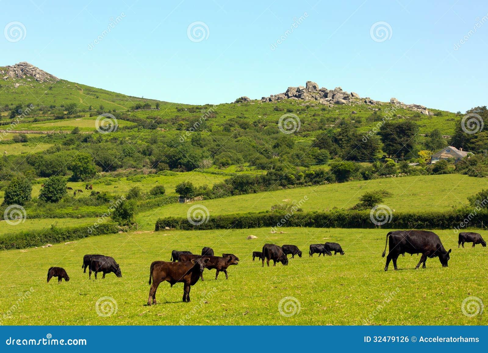 Animali di Dartmoor e tor Devon England