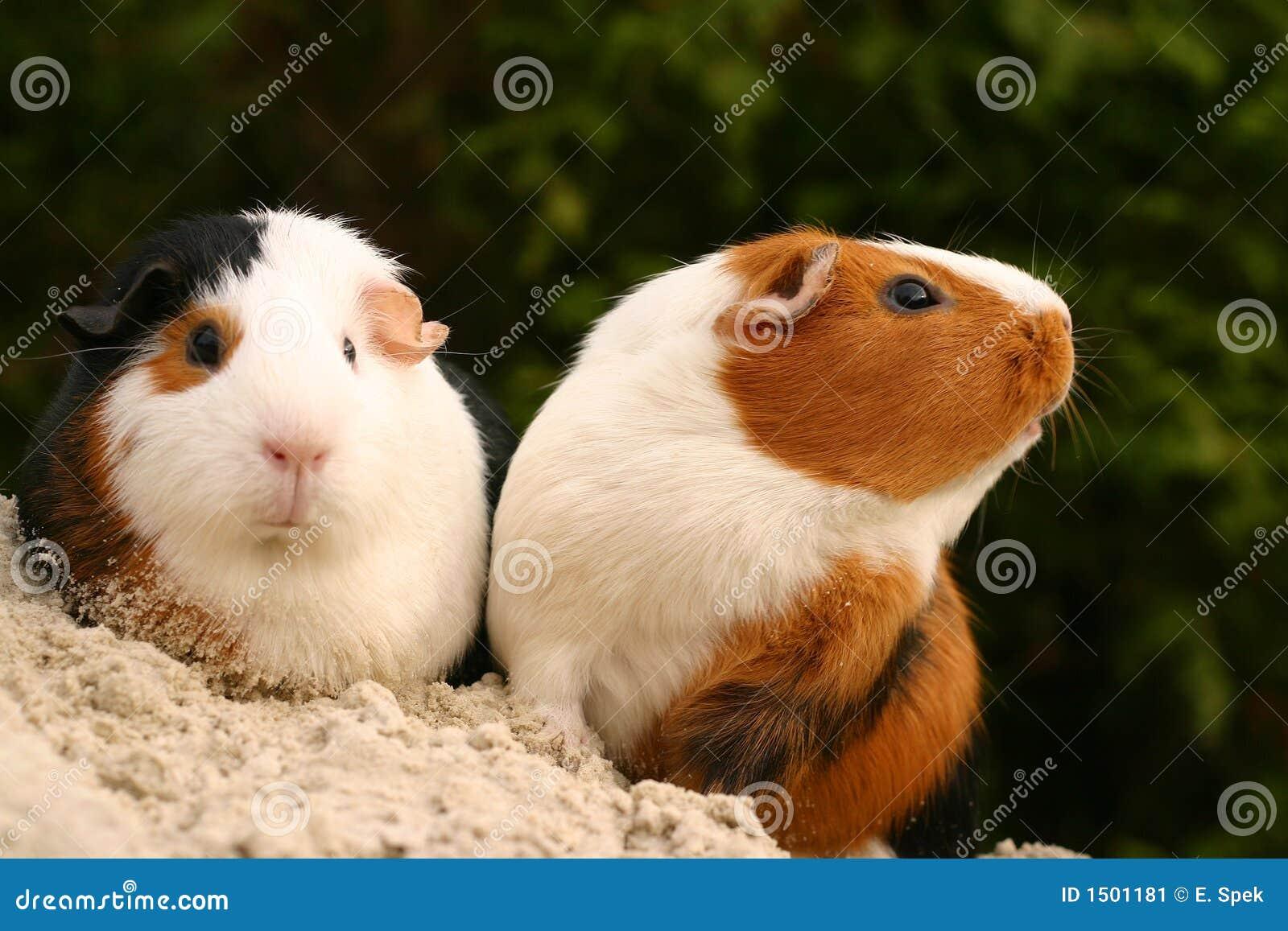 Animali domestici curiosi immagine stock immagine di for Rivista di programmi domestici