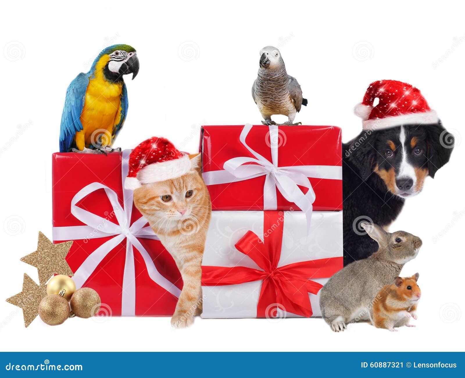 Animali domestici differenti con i pacchetti di natale for Animali a natale