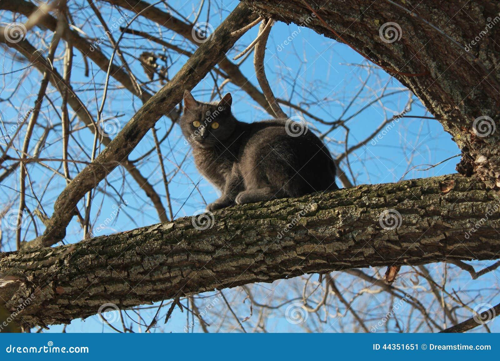Animali domestici, gatto grigio, cielo blu, animali, sotto il cielo aperto