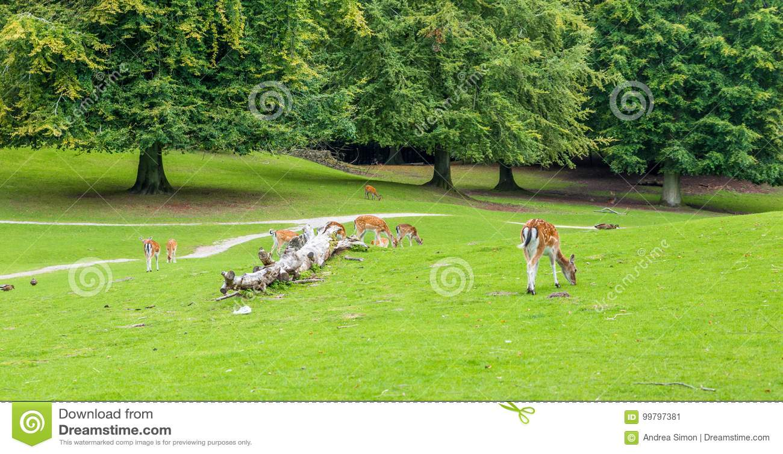 Animali muniti bianchi della fauna selvatica dei cervi in natura