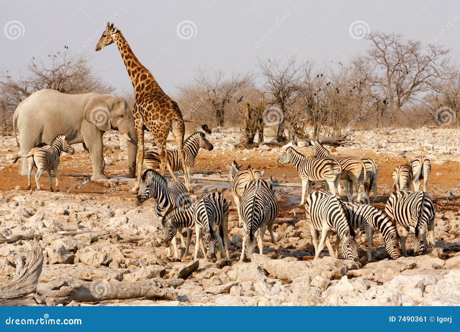 Animals Around A Water Hole Stock Image Image 7490361