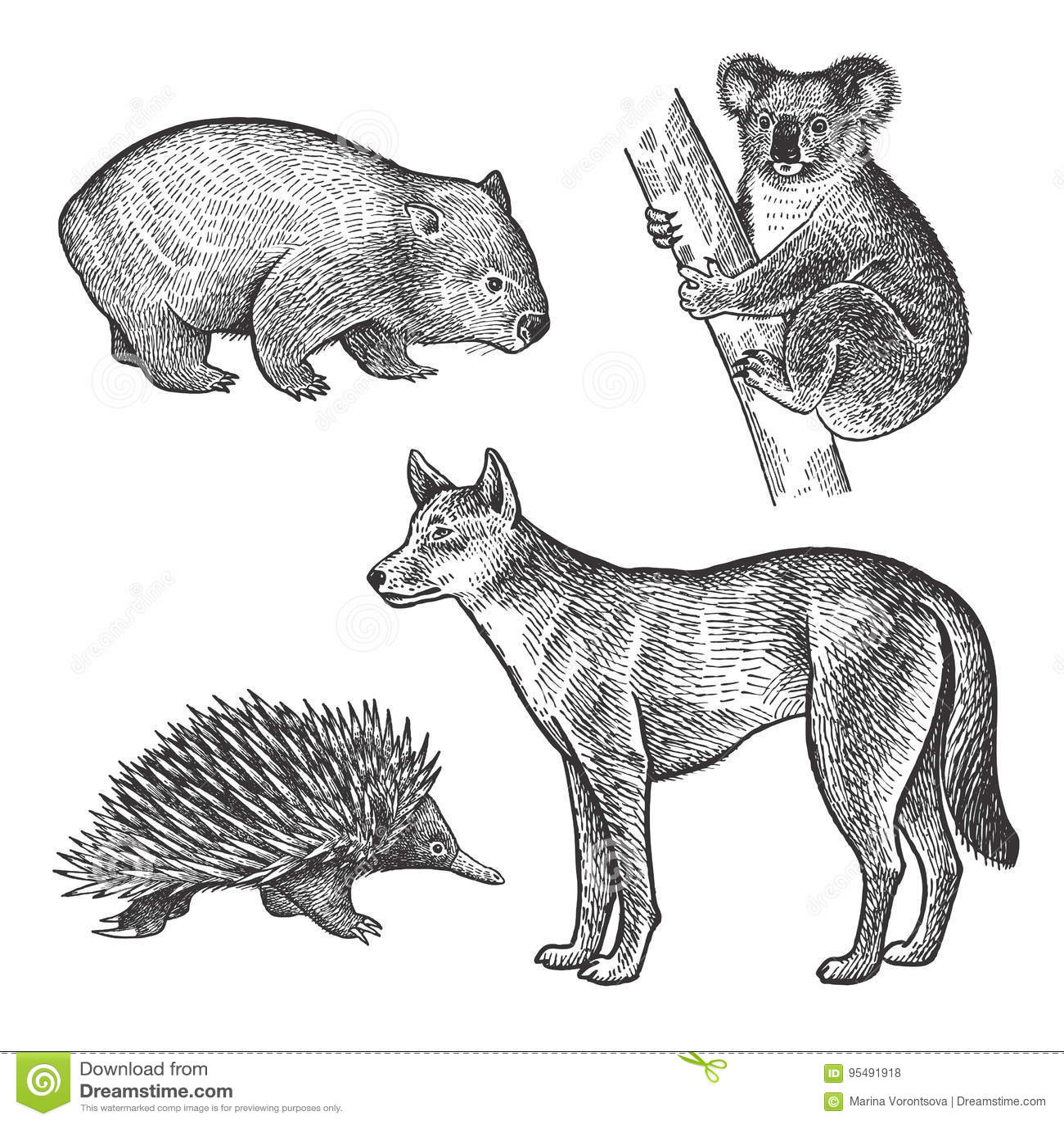 How To Draw A Wombat Art Hub