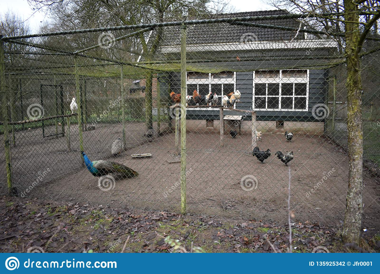 Animals in a bird cage