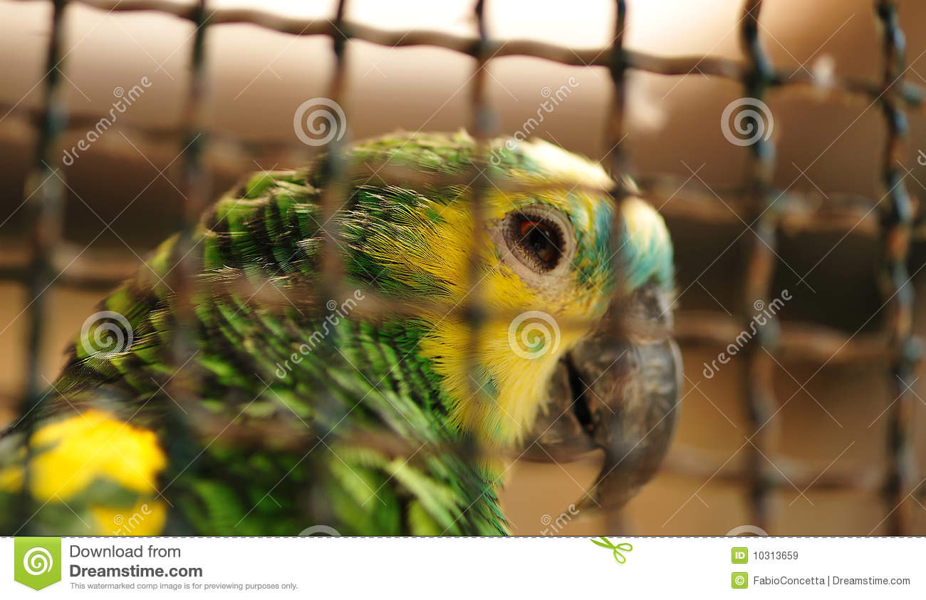 animals in cages royalty free stock images image 10313659