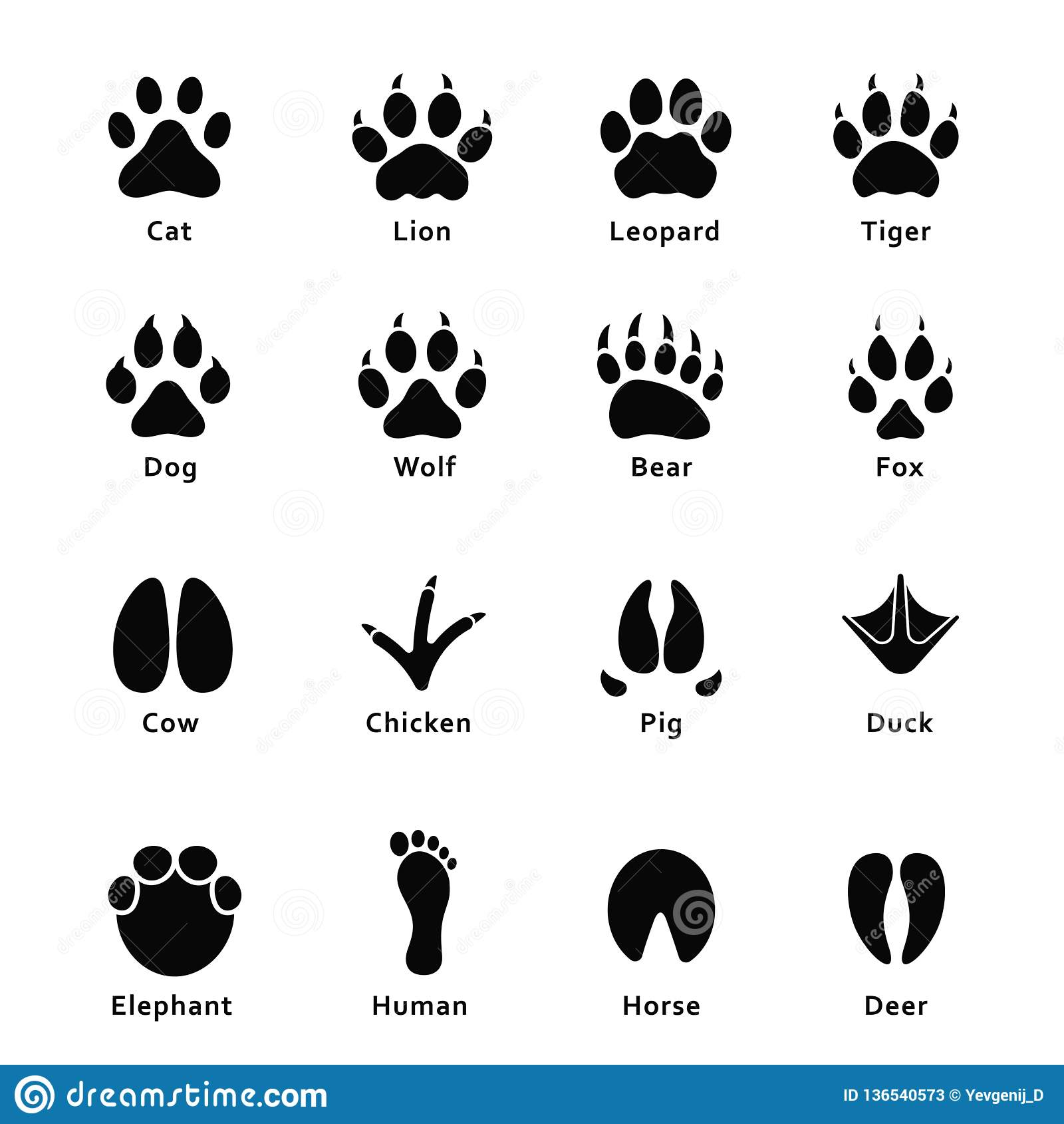 1db5cd9e04c1 Animals footprints, paw prints. Set of different animals and birds  footprints and traces. Cat and lion, tiger and bear, dog, cow, pig,  chicken, elephant, ...