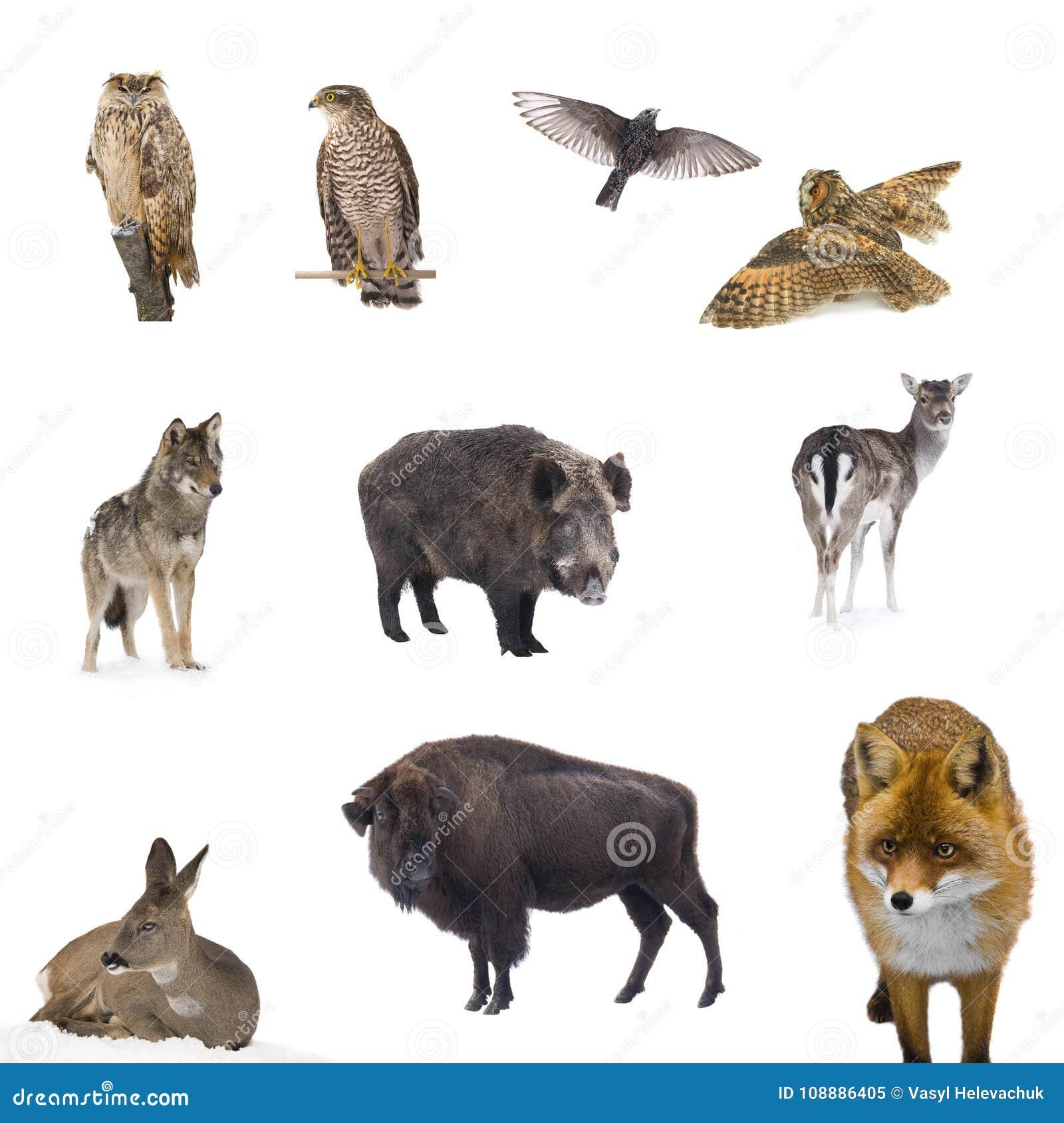 Animals forest