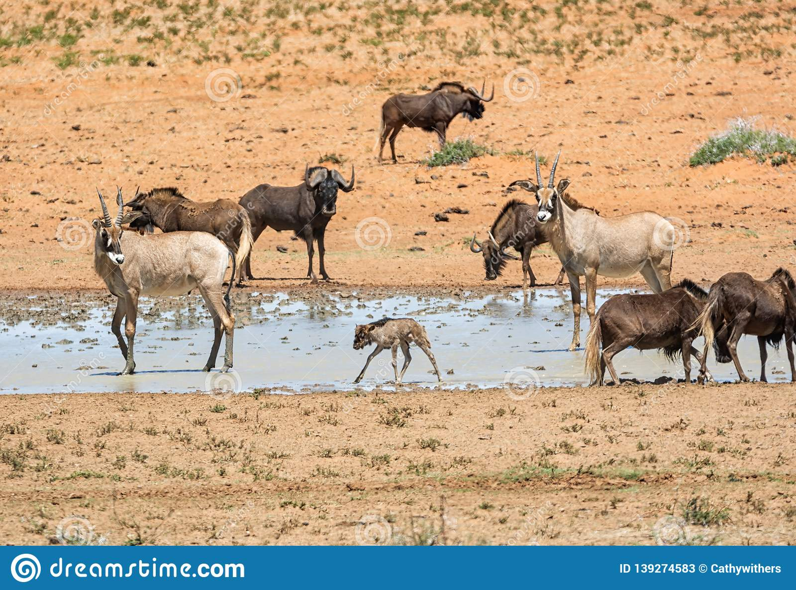 Busy Watering Hole Stock Image Image Of Baby Grass 139274583