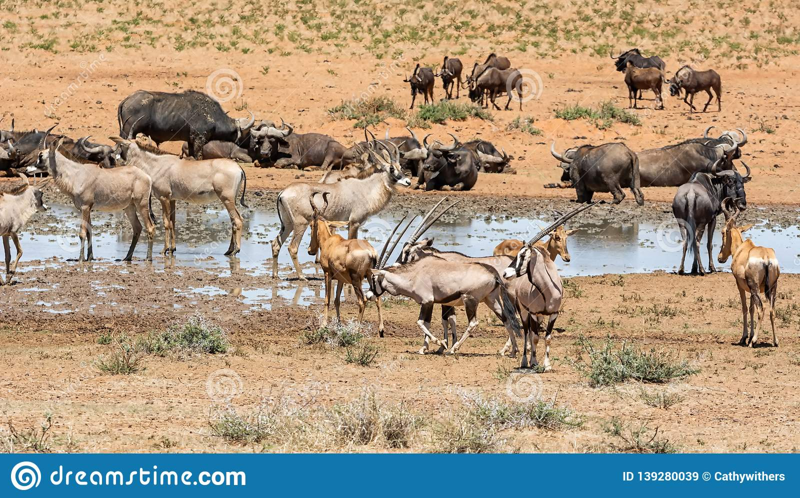 Busy Watering Hole Stock Image Image Of Antelope Africa 139280039