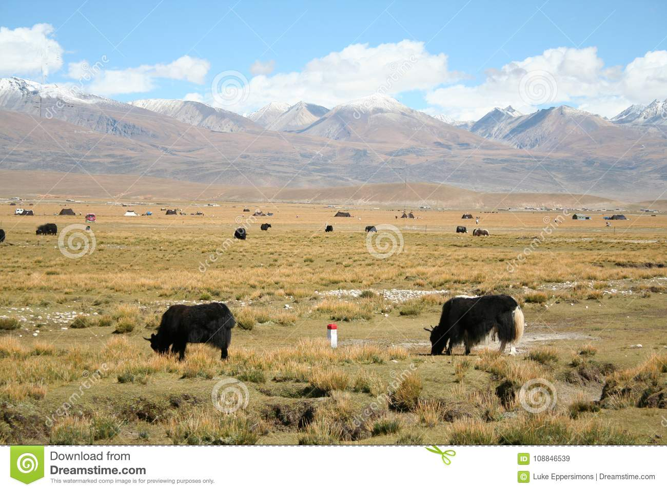 animals grazing in field with tibet mountain range in background