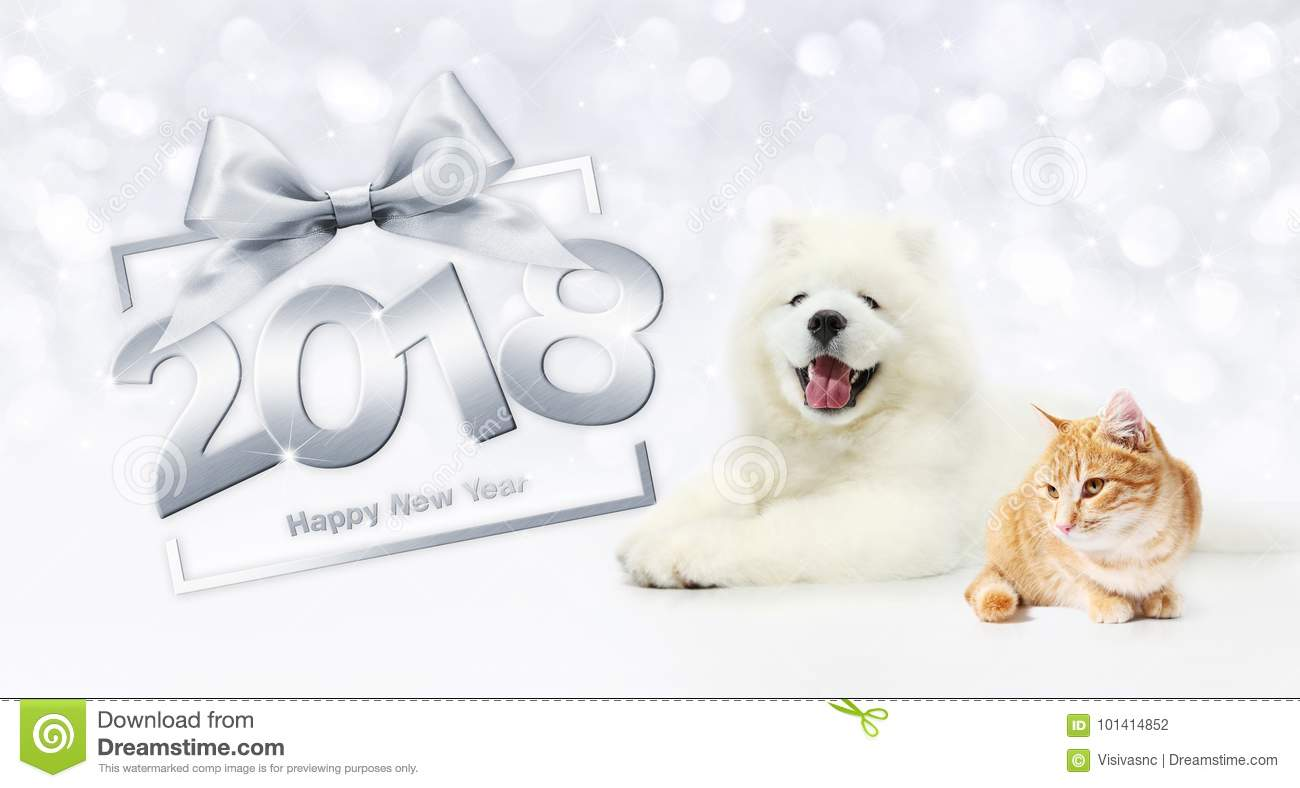 animals happy new year concept cat and dog with gift box frame