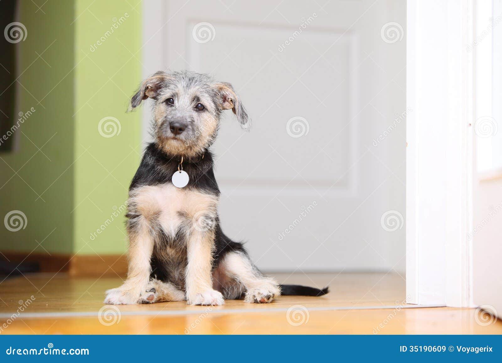 Animals at home dog pet mutt puppy sitting on floor