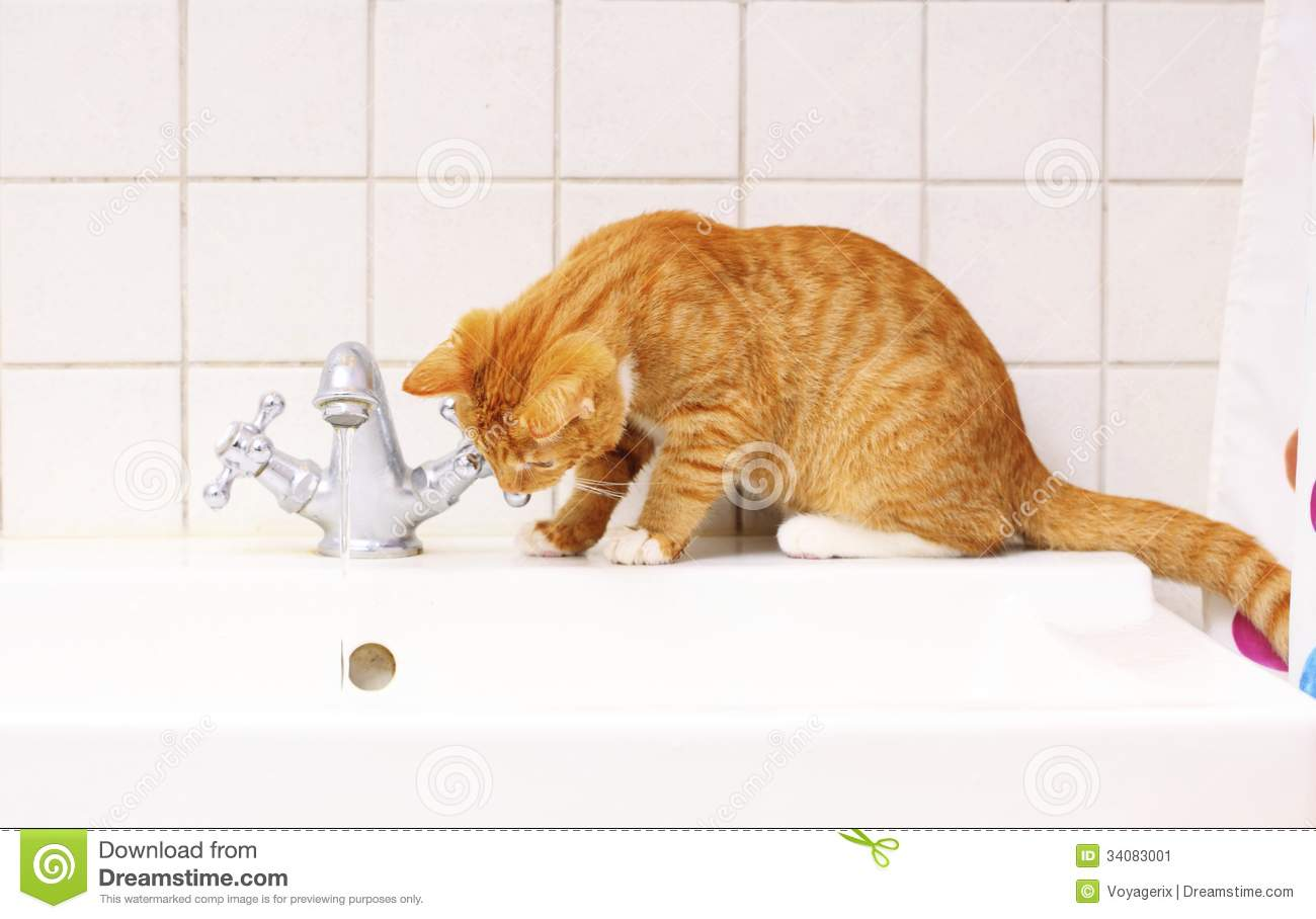 Animals At Home Red Cat Pet Kitty Drinking Water In Bathroom Stock ...