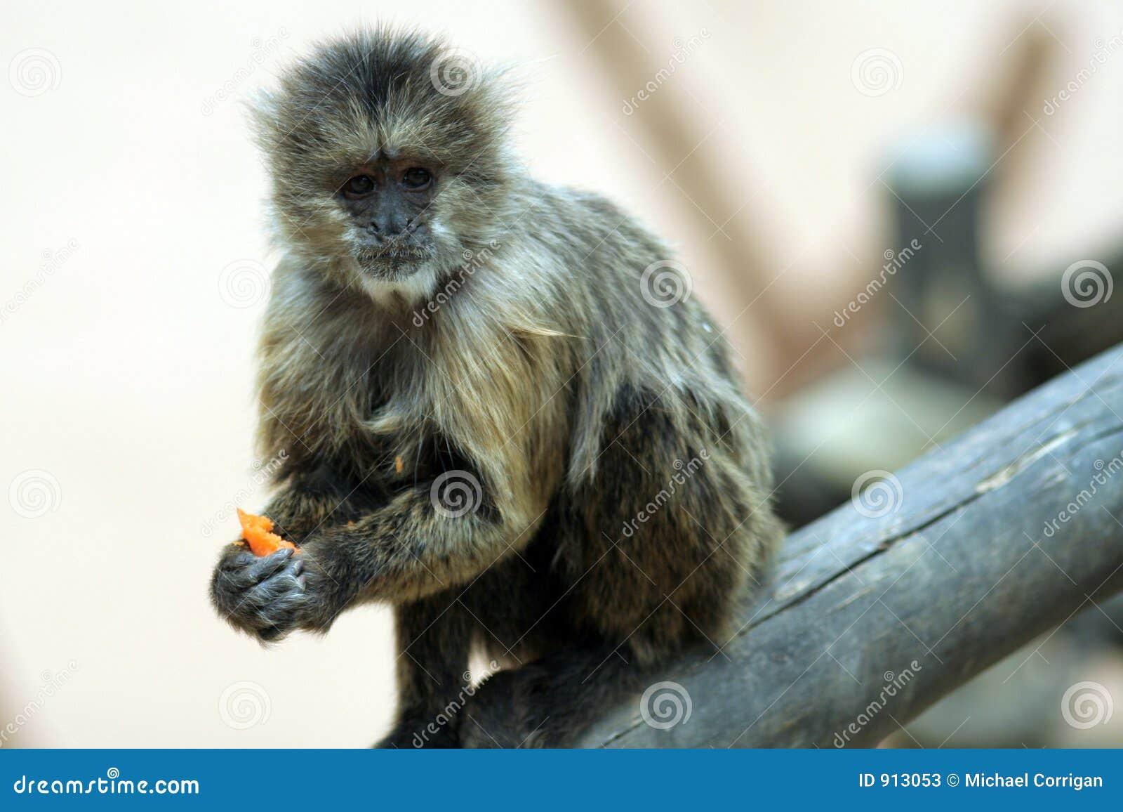 animals in jerez   spain stock photos   image 913053