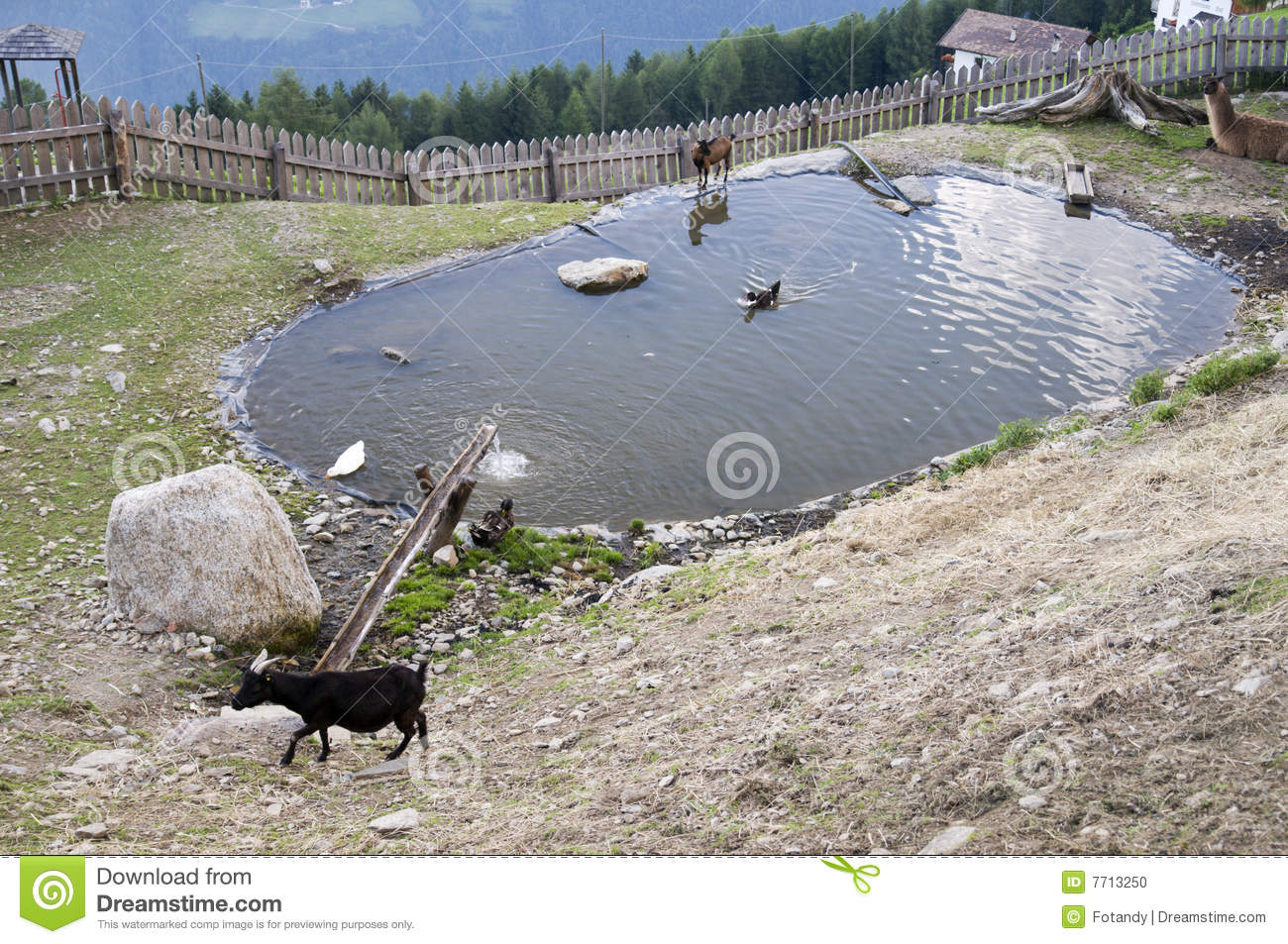 Animals by pond in alps stock photo image 7713250 for Pond animals