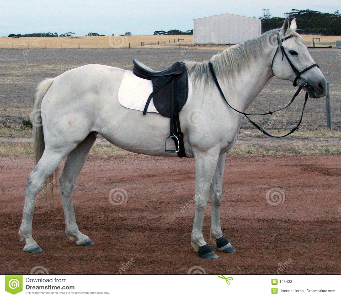 Horse is tacked up with saddle and bridle ready for a ride.