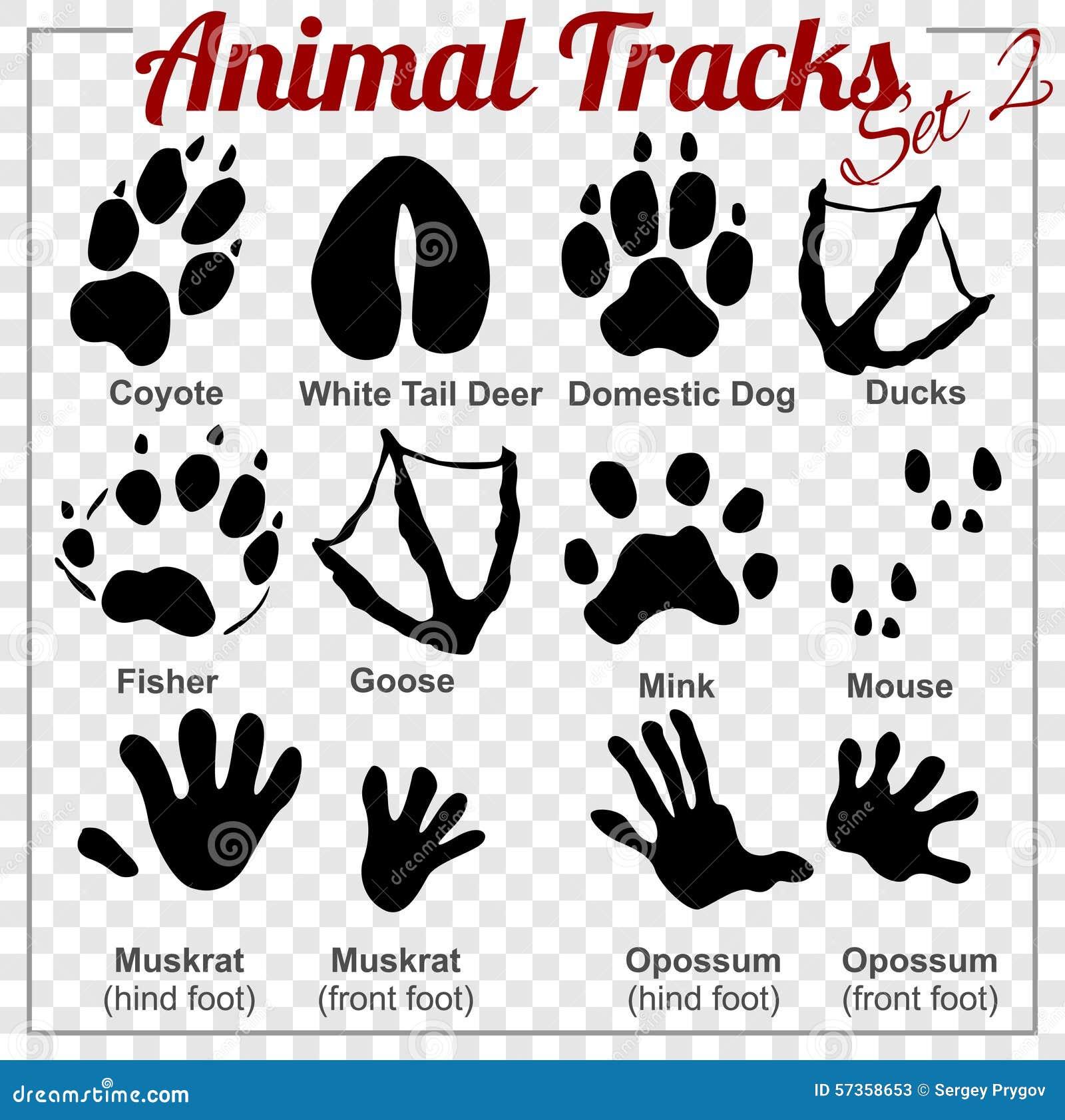 Animals Tracks - Vector Set Stock Vector - Image: 57358653