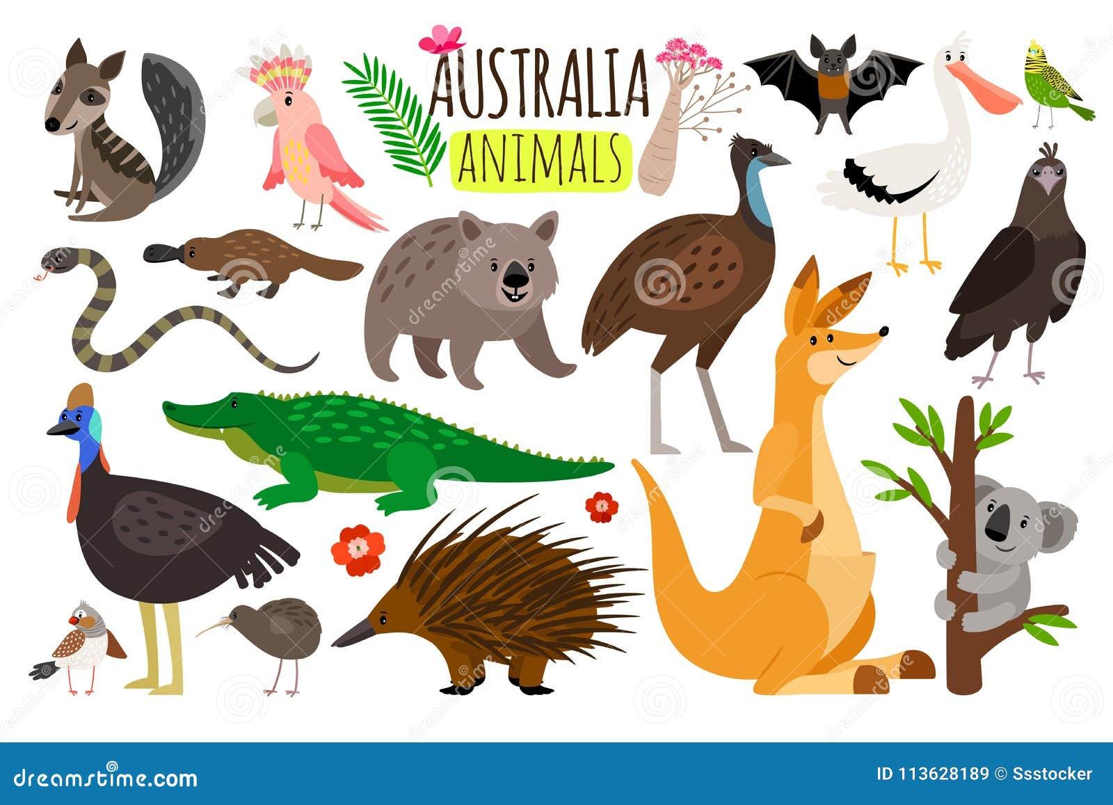 Animaux australiens Dirigez les icônes animales de l émeu d Australie, de kangourou et de koala, de wombat et d autruche