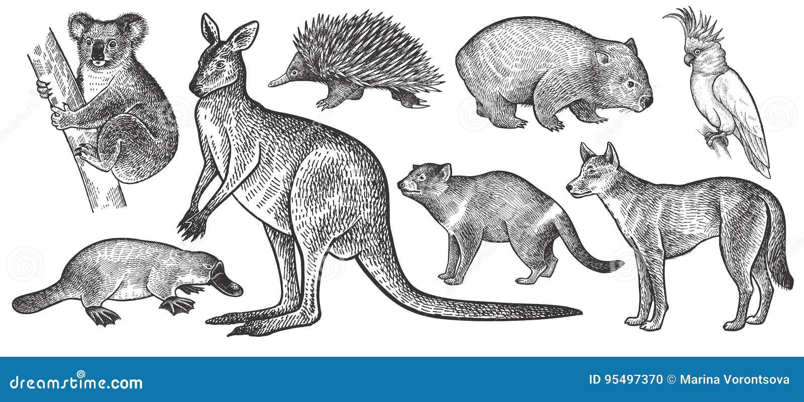 Animaux d ensemble d Australie