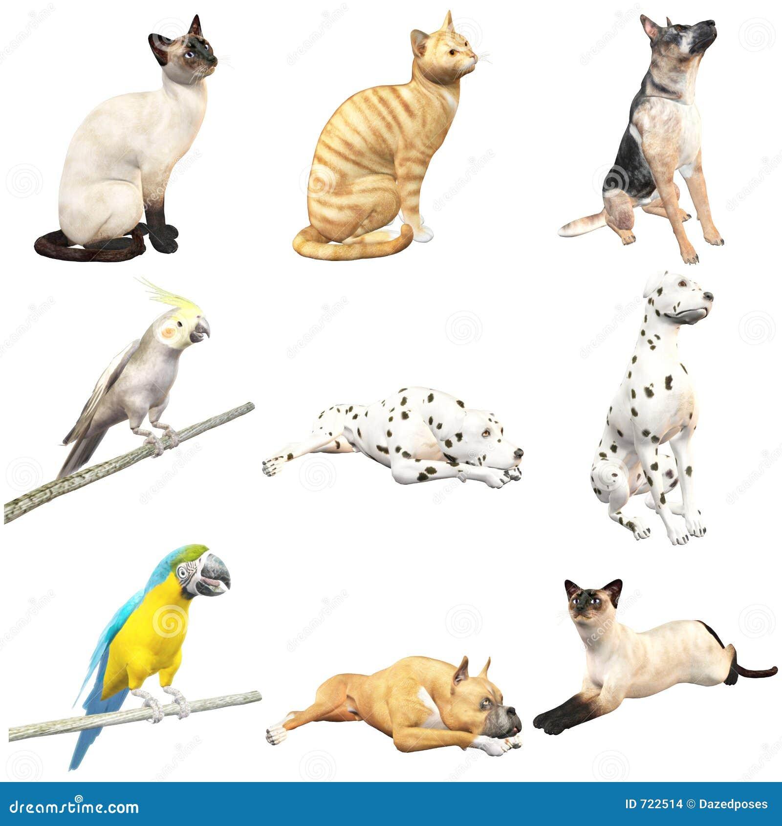 Des gens nus avec des animaux domestiques