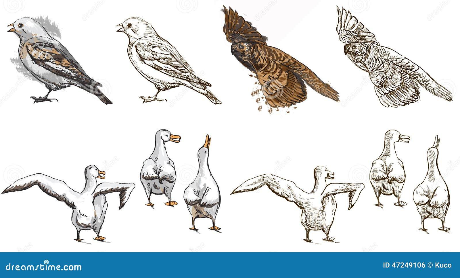 Animaux Polaires Livre De Coloriage Illustration De Vecteur