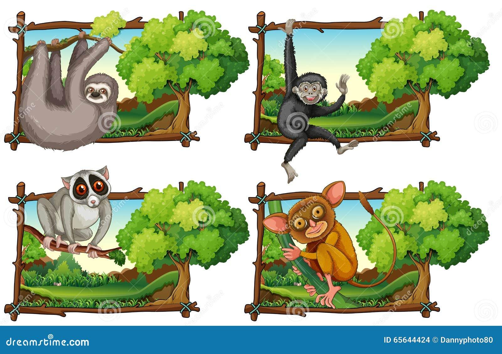 Animaux sauvages haning sur la branche