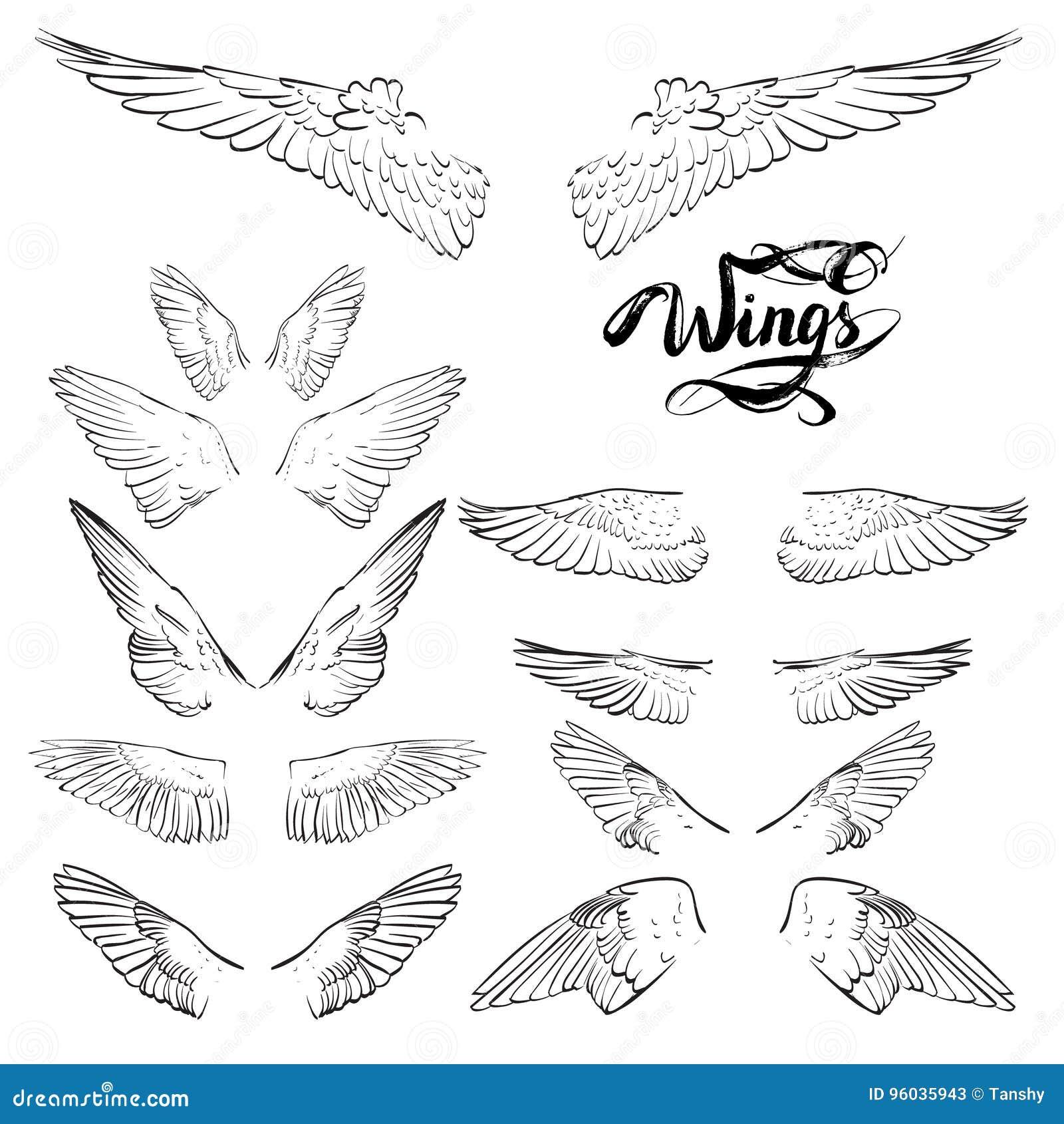Aniołów skrzydła, literowanie, rysunkowy wektor